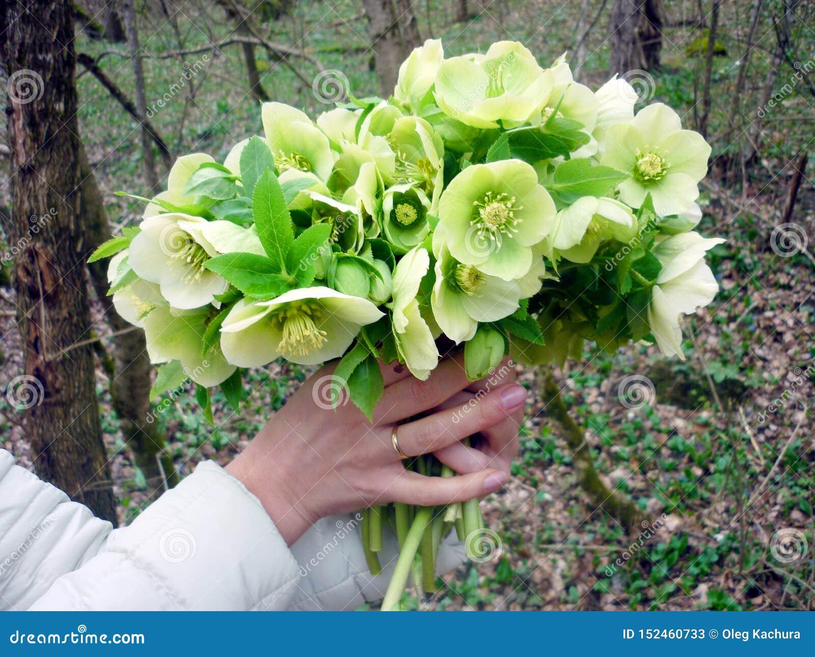 Mooie de lentebloemen in de handen van een meisje