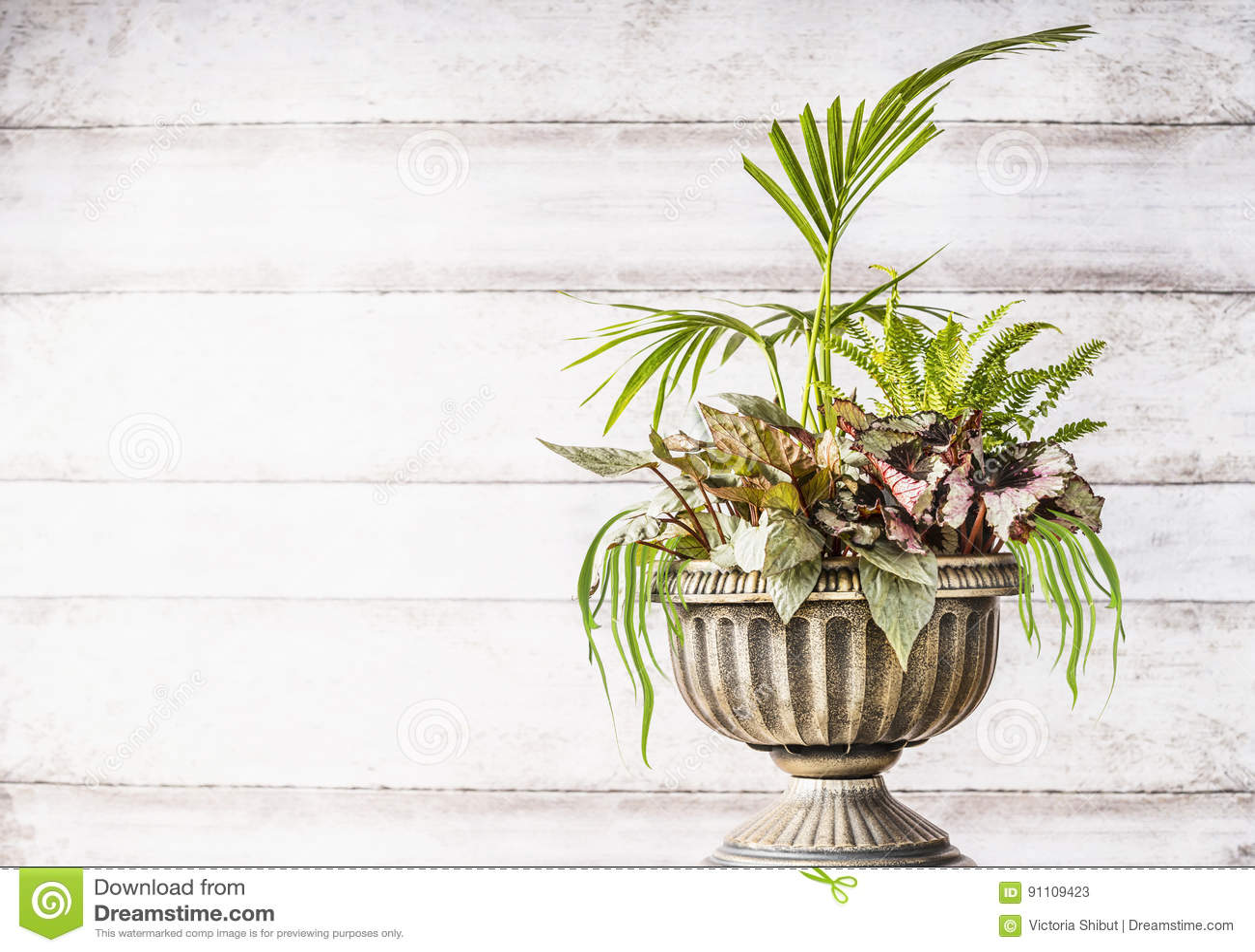 Mooie de plantersregeling van de terrasurn met mooie installatie van palm, grassen en bladbegonia s bij witte houten achtergrond,