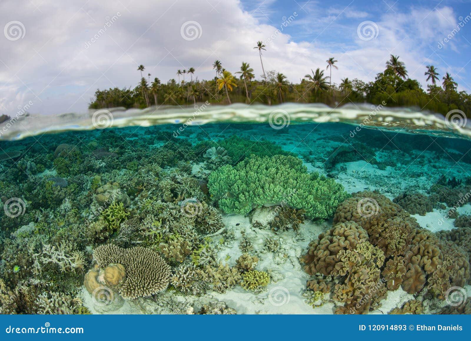 Mooie Ertsader in Ondiep Water van Solomon Islands