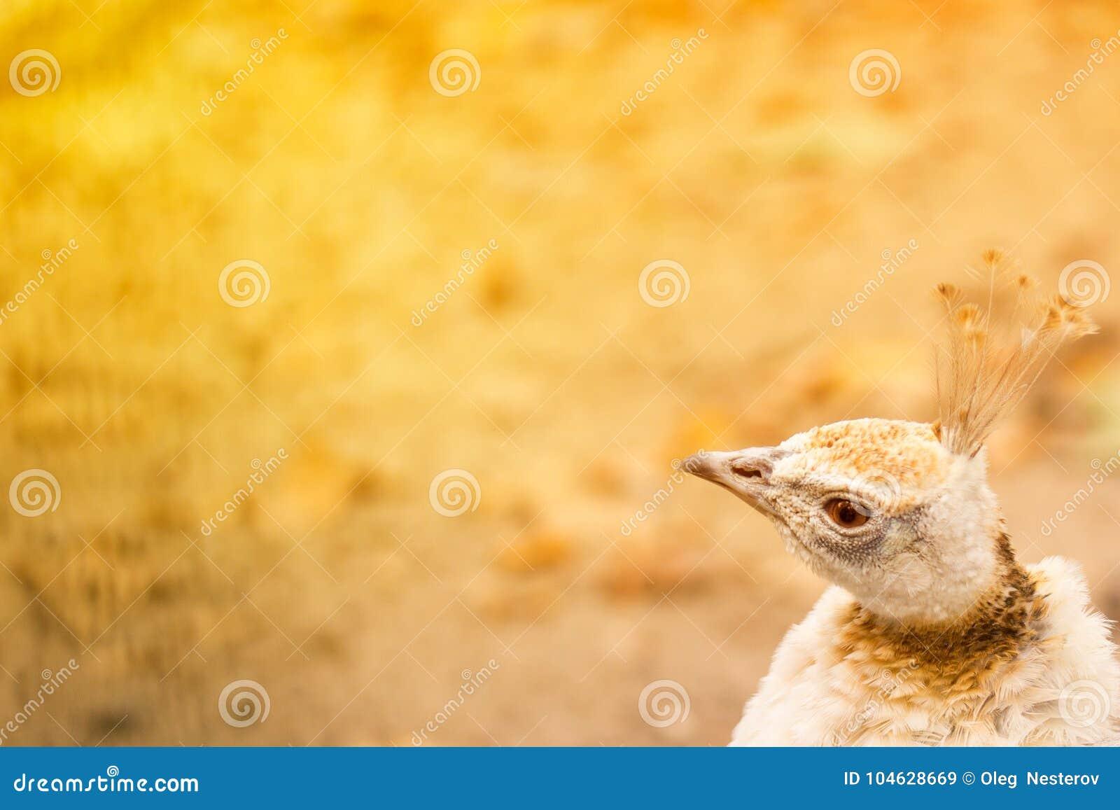 Download Mooie Exotische Vogel Op Een Heldere Warme Achtergrond Stock Afbeelding - Afbeelding bestaande uit exemplaar, helder: 104628669
