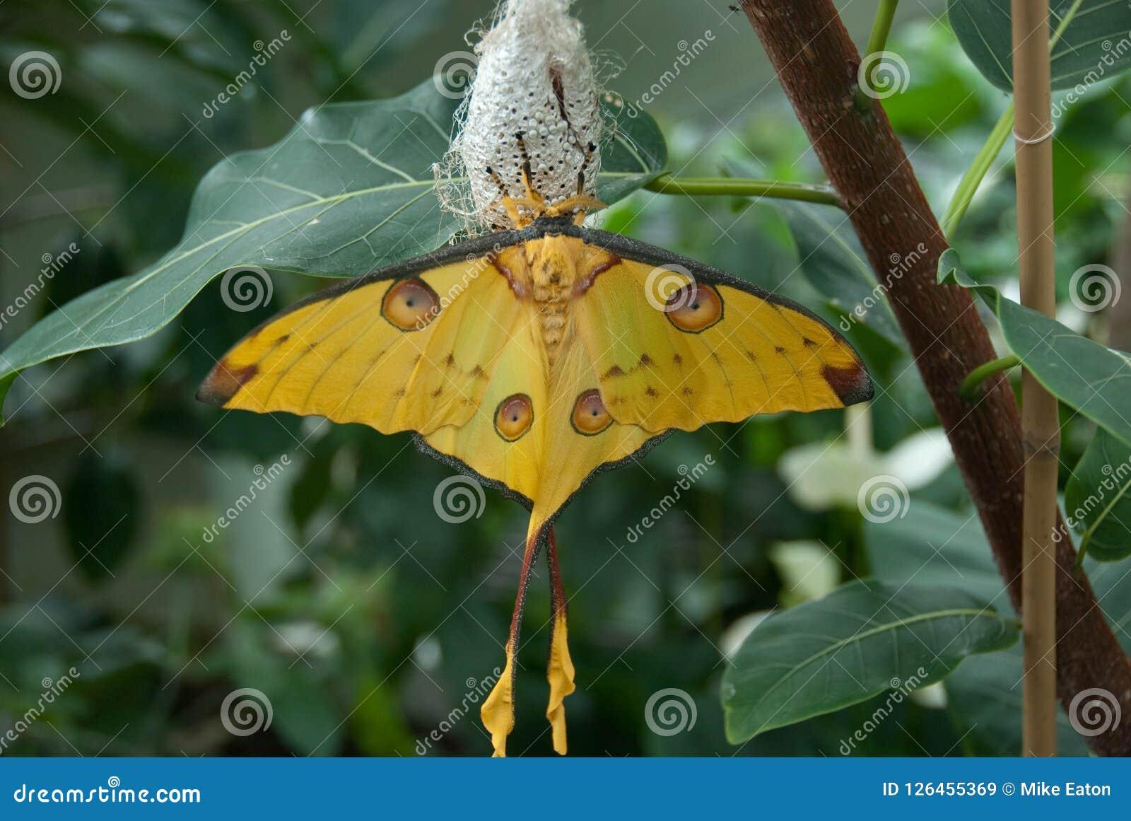 Mooie Gele Vlinder