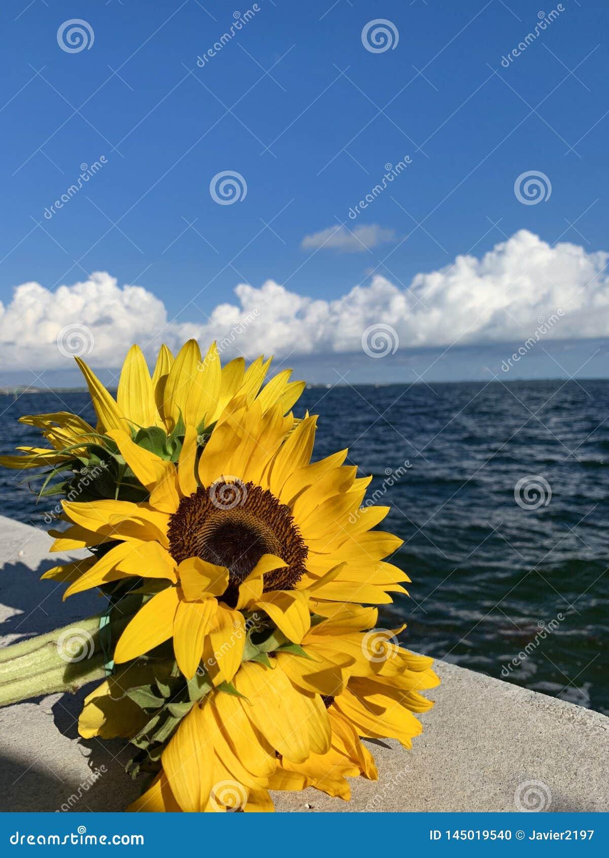 Mooie glanzende zonnebloem