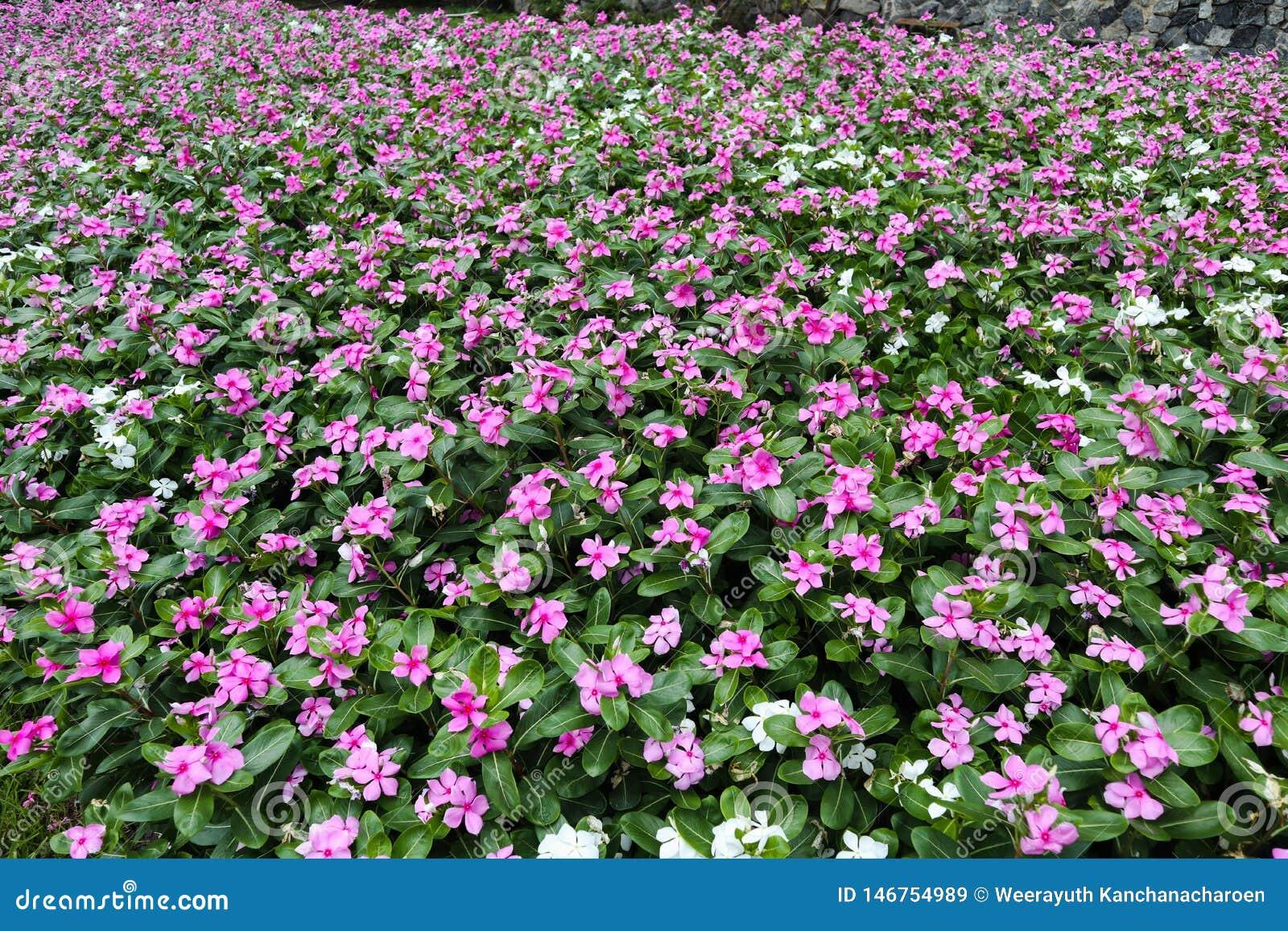 Mooie groene boom, installaties, bossteen en bloemen in de openluchttuinen en de openbare parken