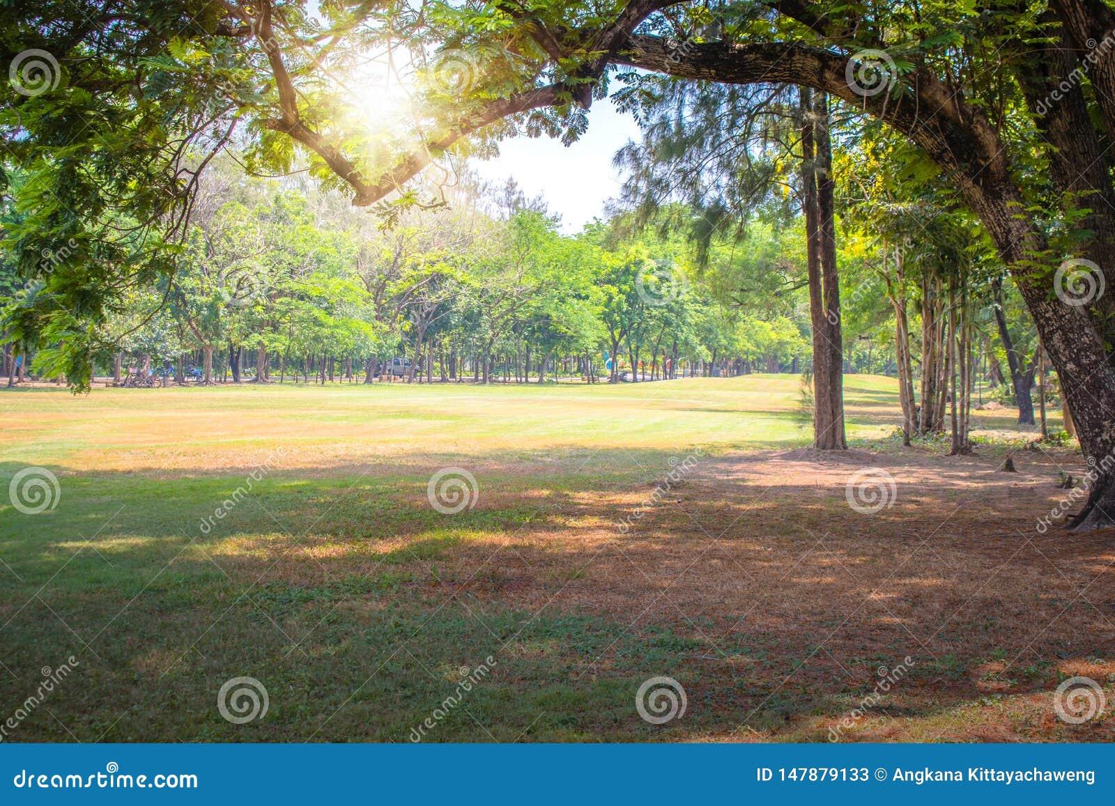 Mooie groene gazon en bomentakken in openbaar park