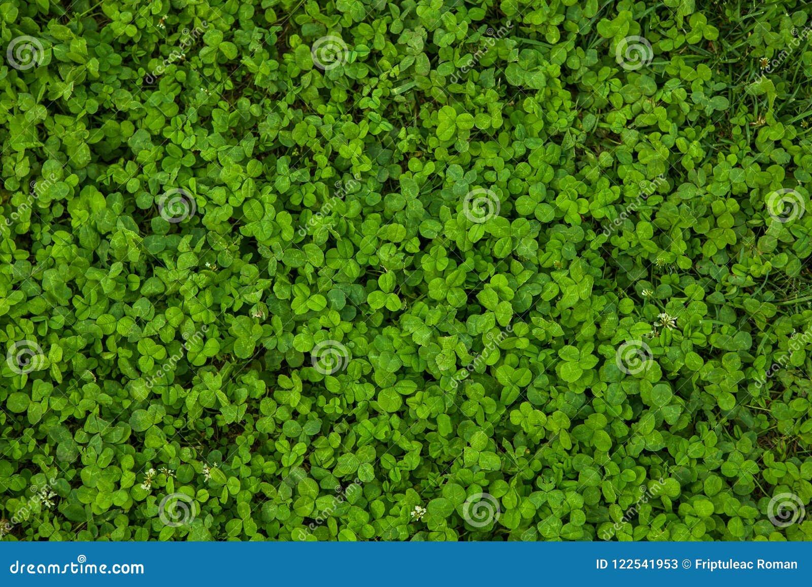 Mooie groene grastextuur
