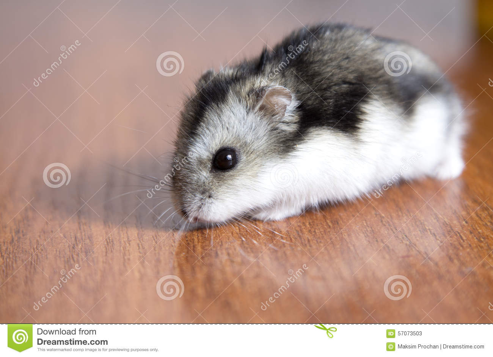 Mooie hamsterzitting op de lijst