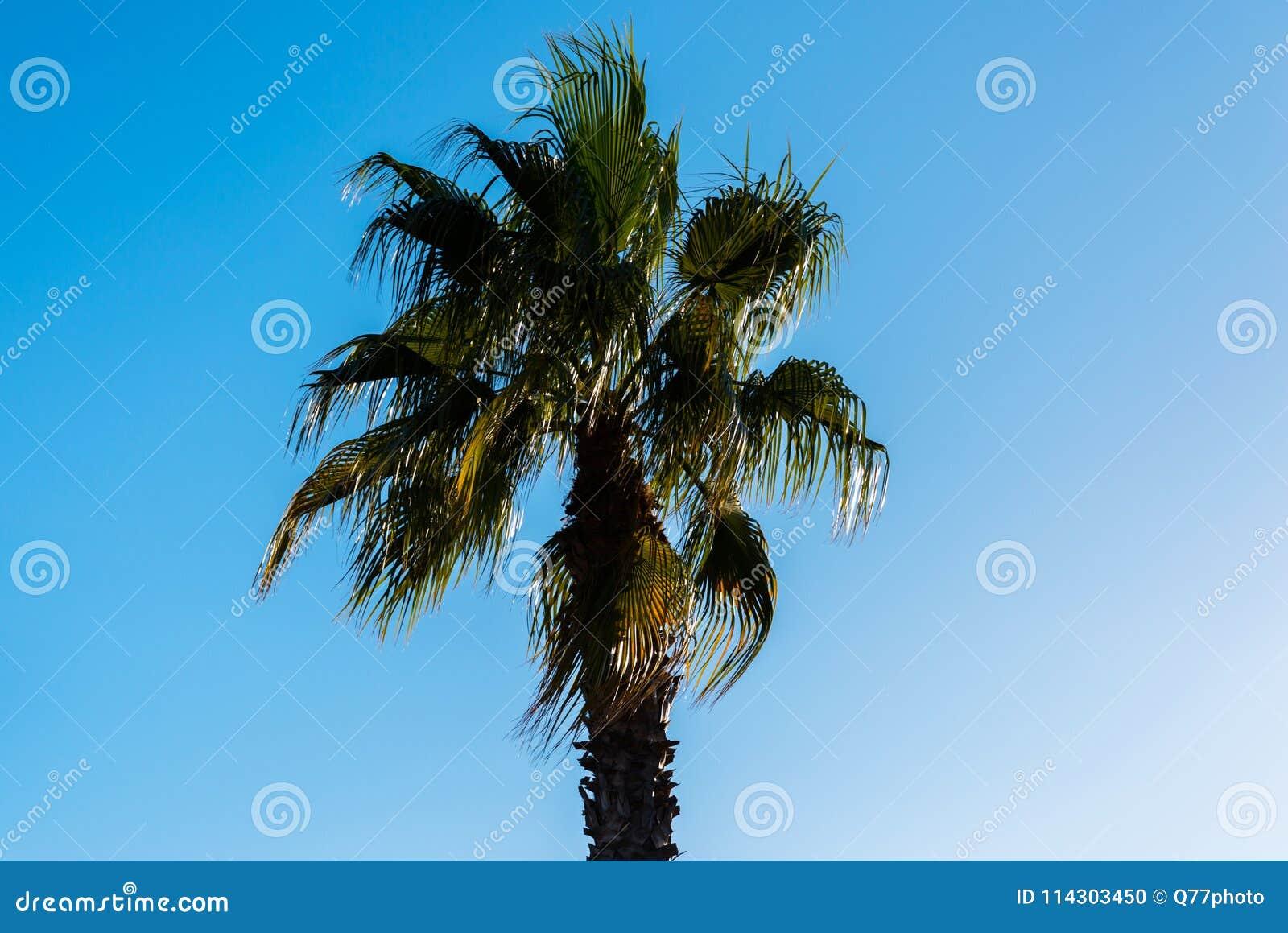 Mooie het uitspreiden palm, uitheemse gewassensymbool van vakantie,