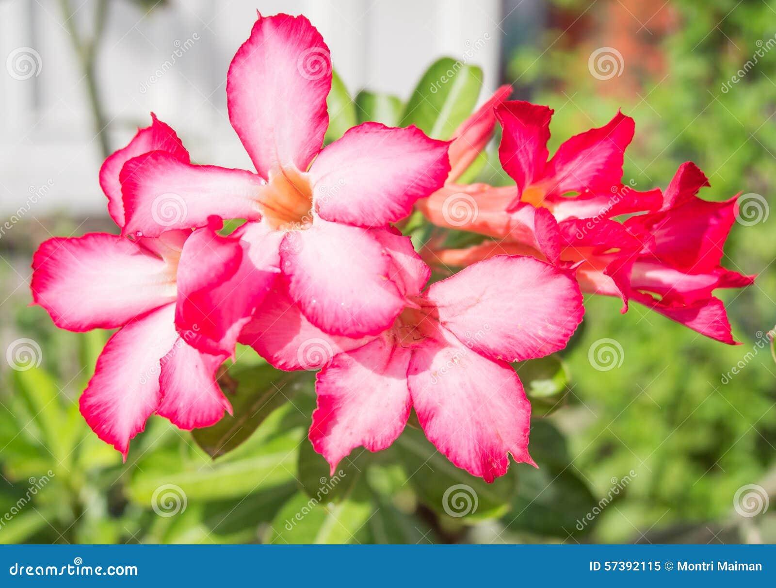 Mooie hibiscusbloemen in het park