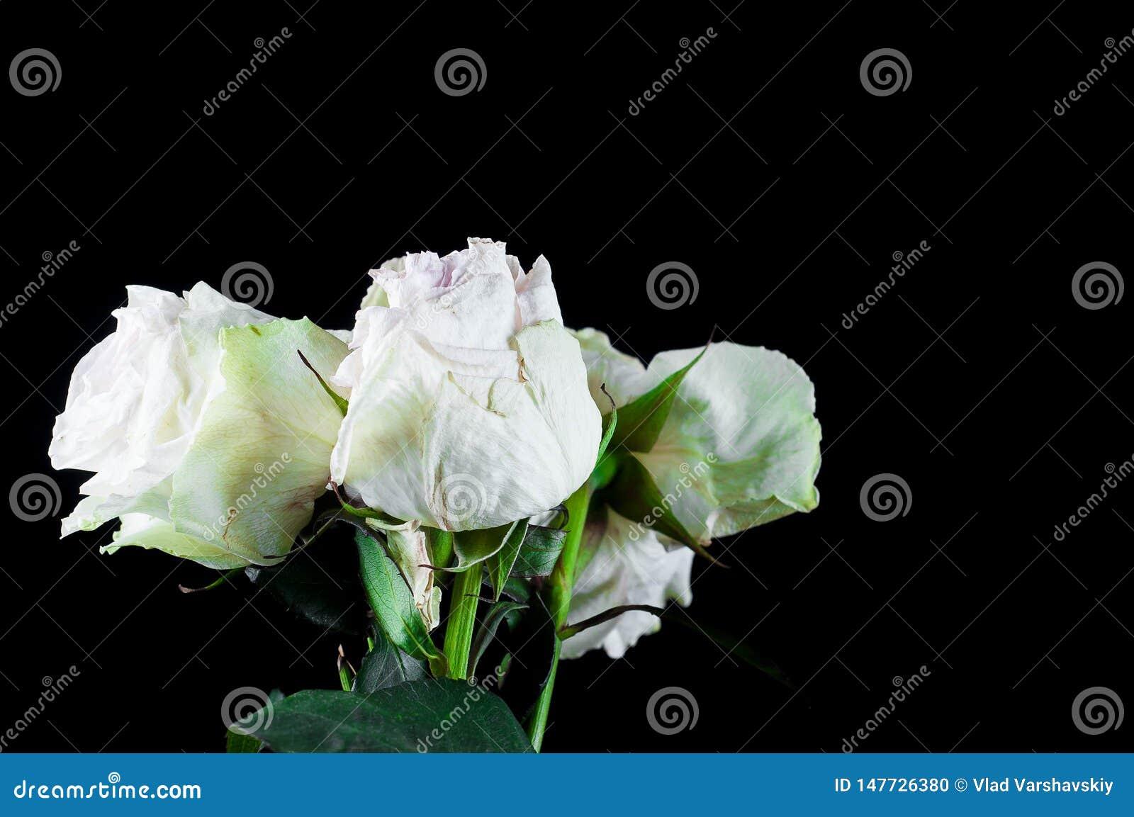 Mooie installaties met geurige bloemen zoals binnen