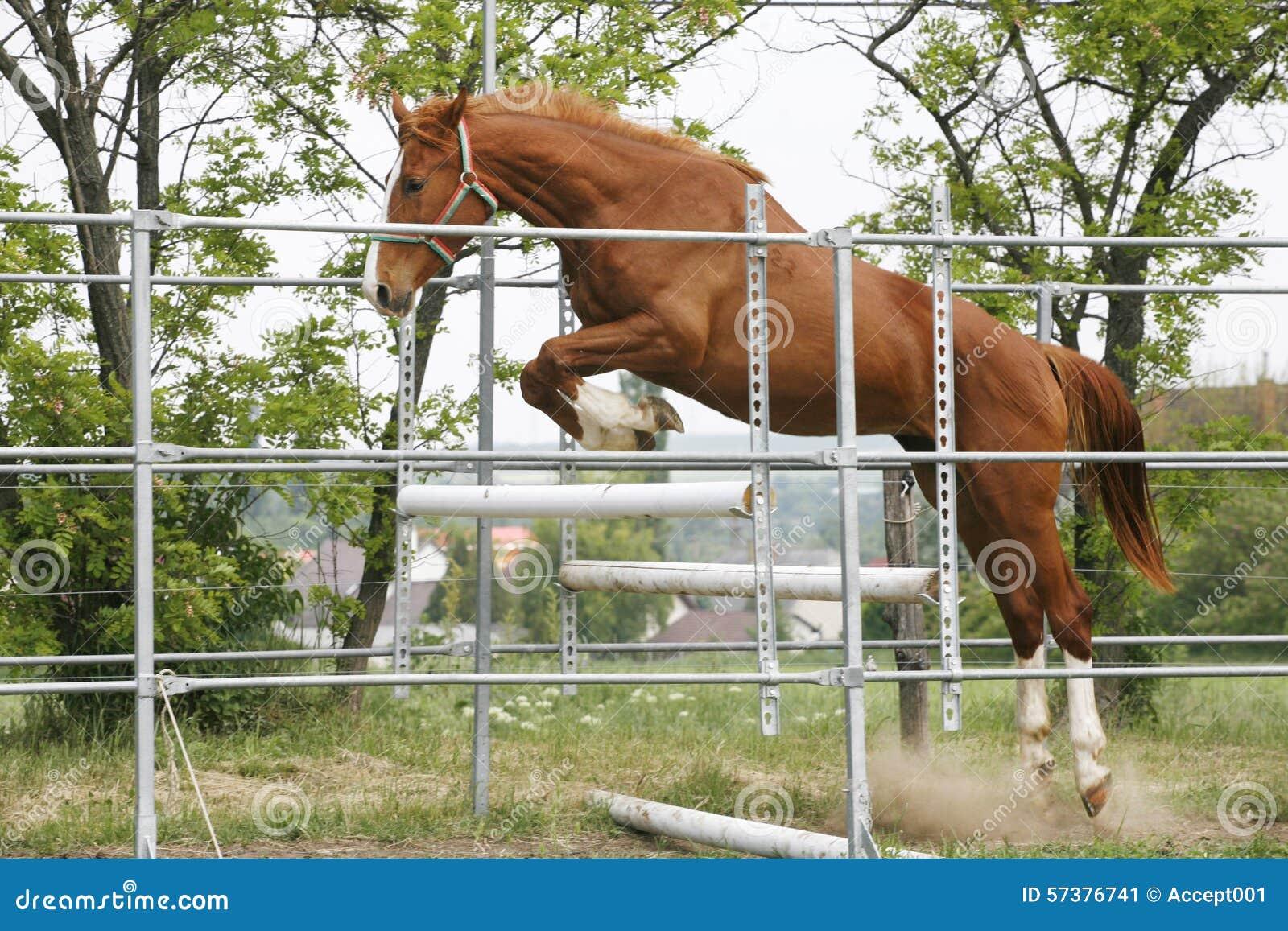Mooie jonge rasechte paardsprong over barrière