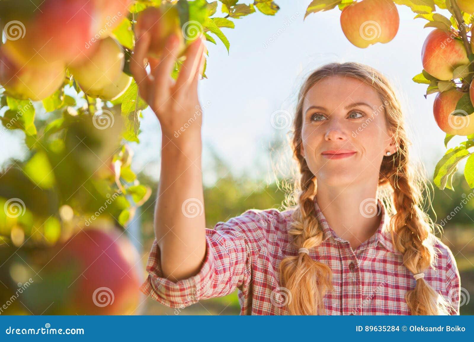Mooie jonge vrouw die rijpe organische appelen plukken