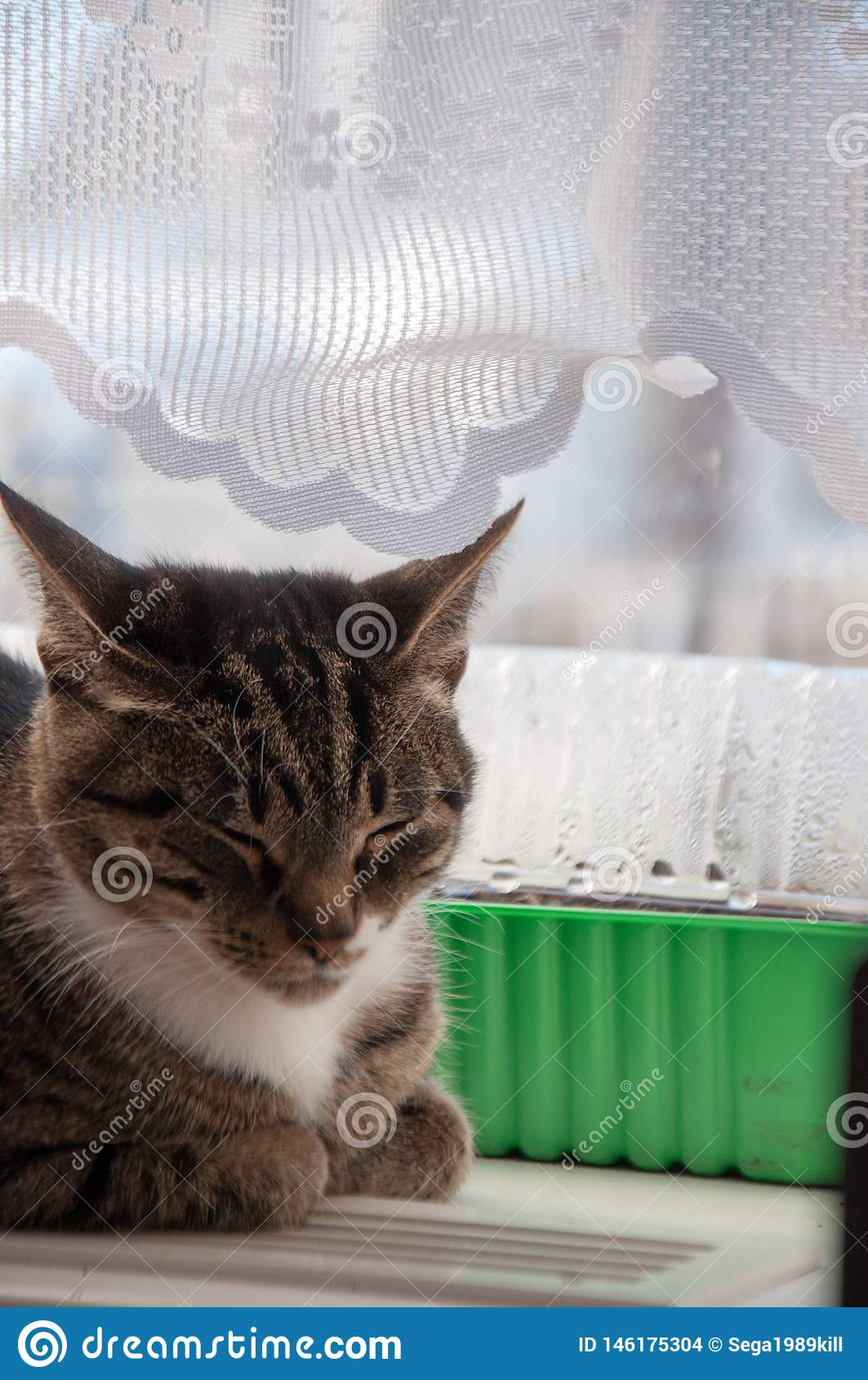 1 mooie kat baldeet op het venster