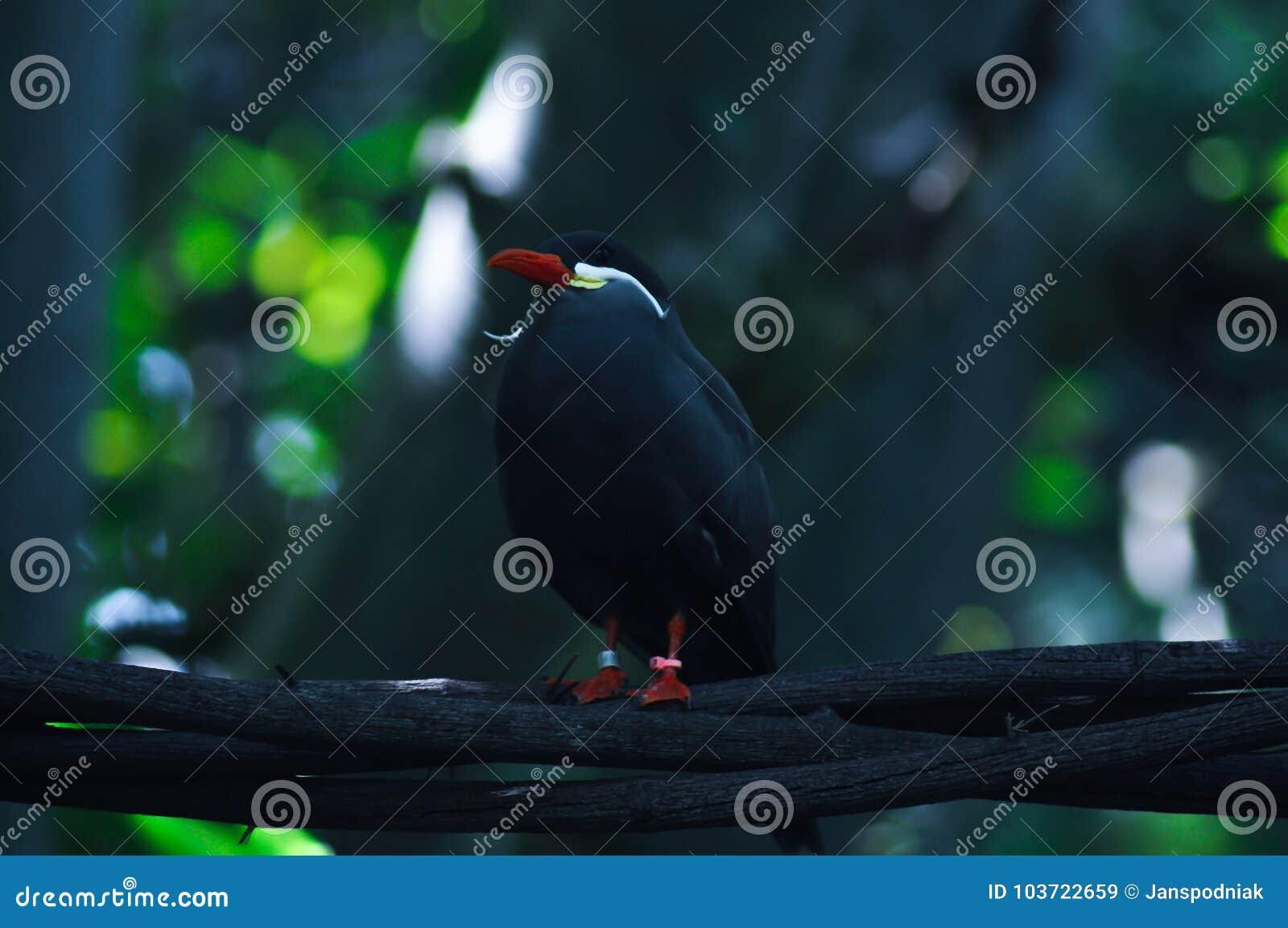 Mooie keurige vogel op tak