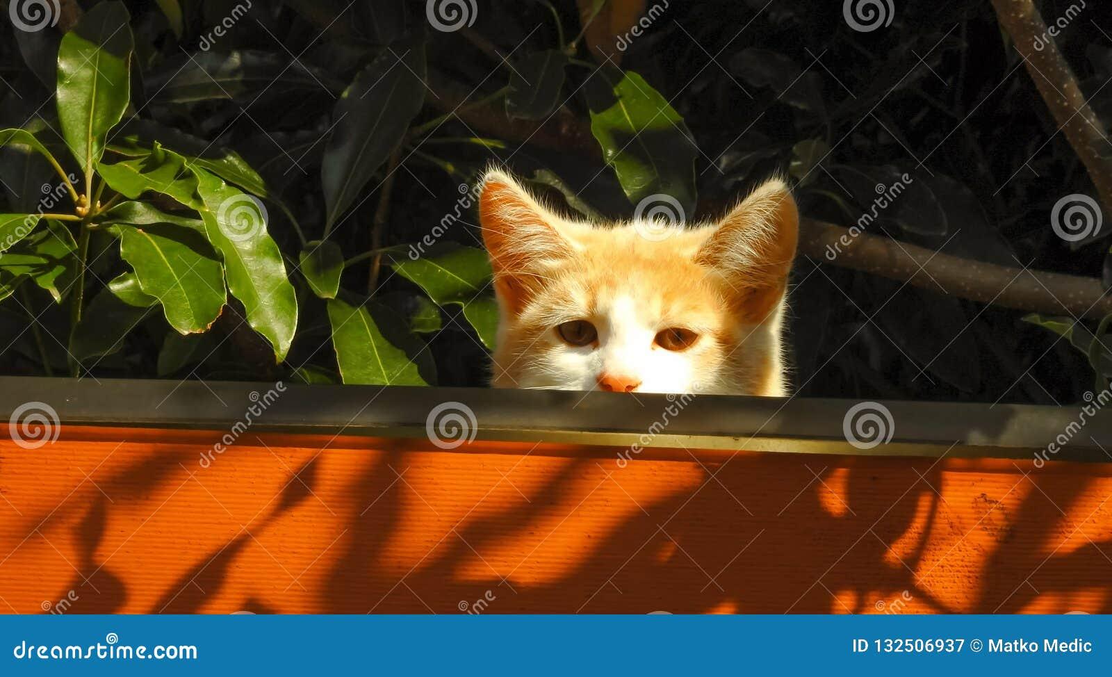 Mooie kleine oranje kat op het dak