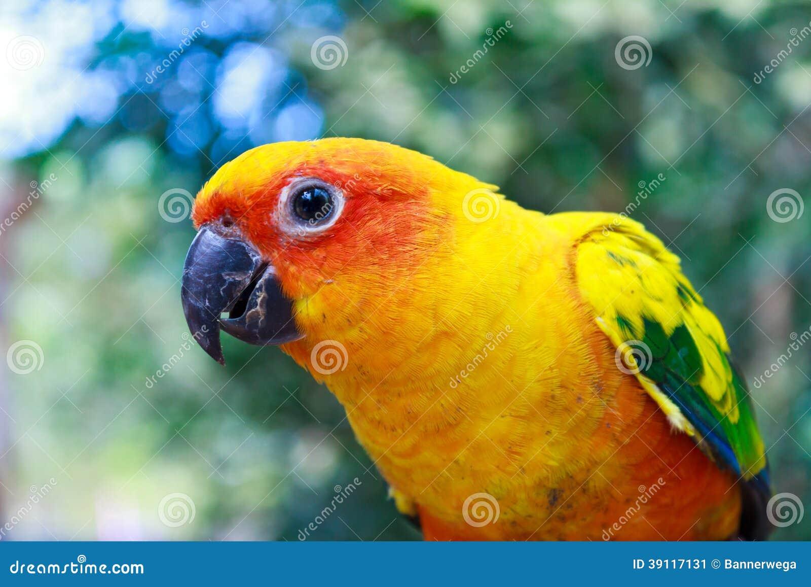 Mooie kleurrijke papegaai