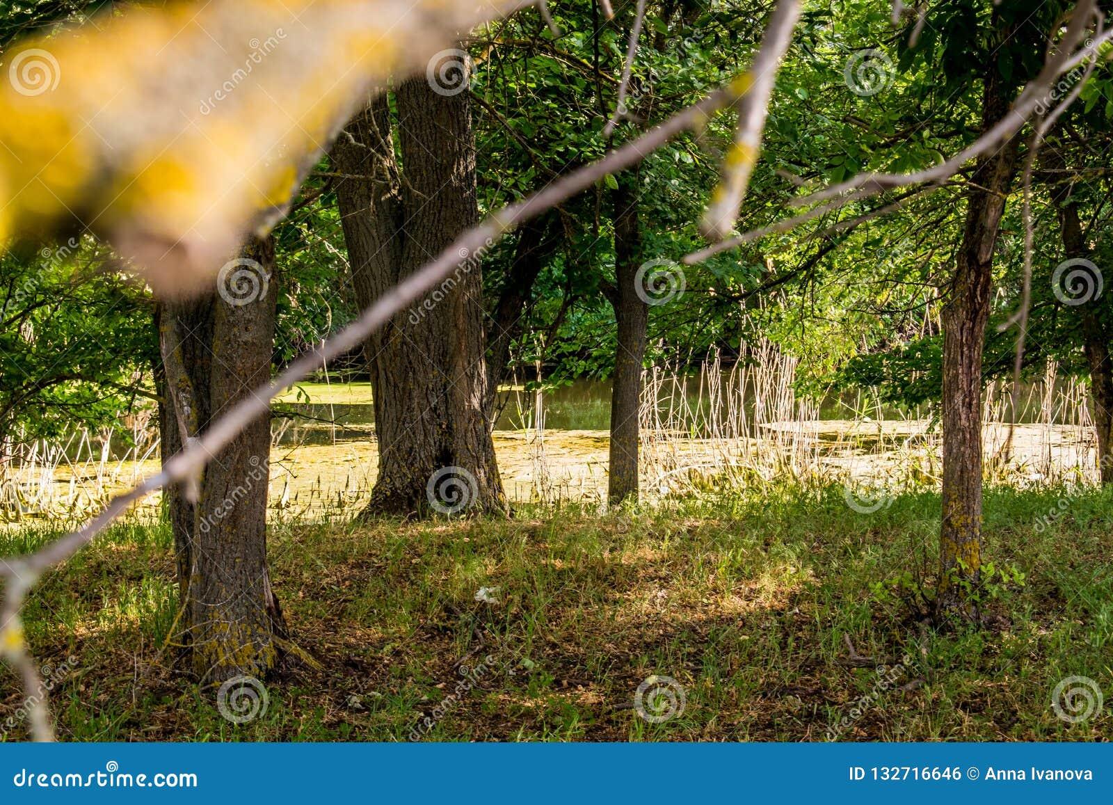 Mooie landschappen van Rusland Het gebied van Rostov Kleurrijke plaatsen Groene vegetatie en rivieren met meren en moerassen Boss