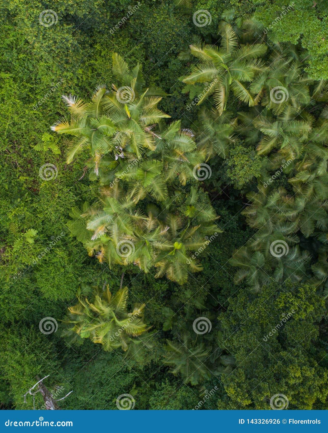 Mooie luchtscène over een regenwoud en een kleine kreek