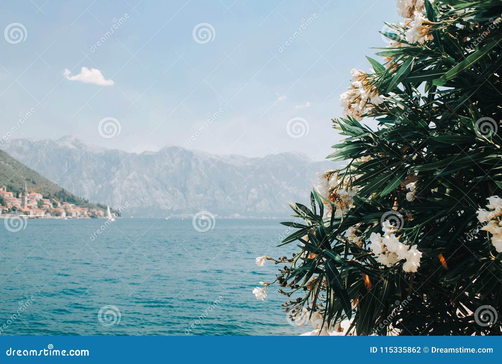 Mooie mening over Kotor-baai van eiland