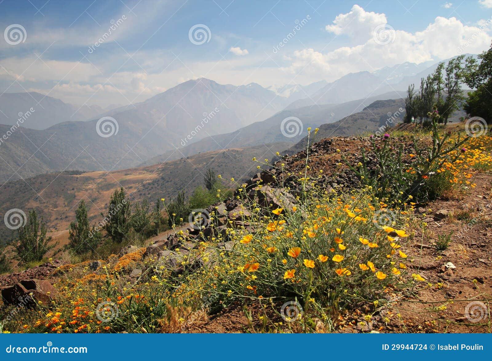 De bergen van de andes met bloemen stock foto afbeelding 29944724 - Decoratie stijl van de bergen ...