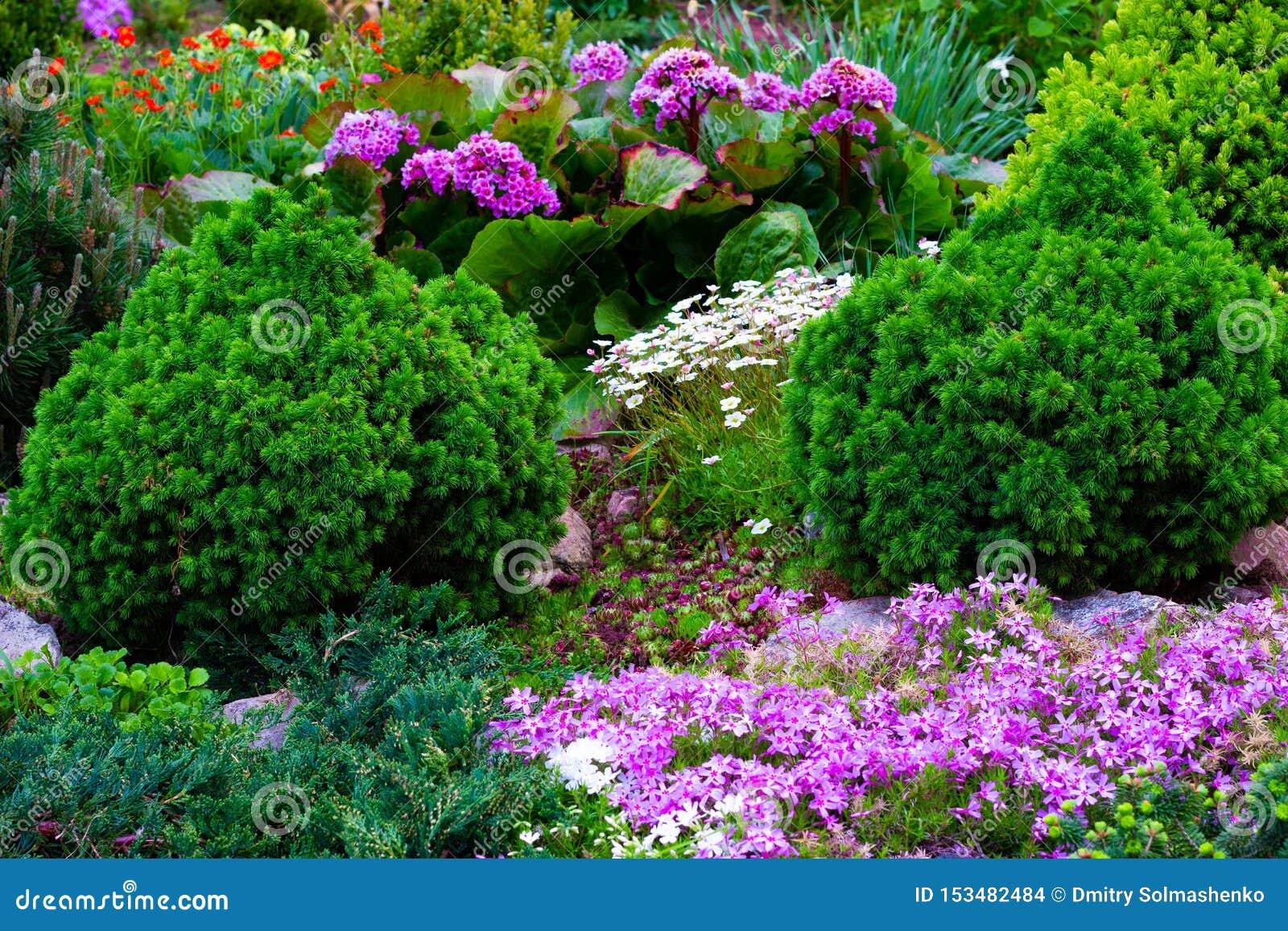 Mooie mening van de gemodelleerde tuin in de binnenplaats Het modelleren het modelleren gebied in de zomer