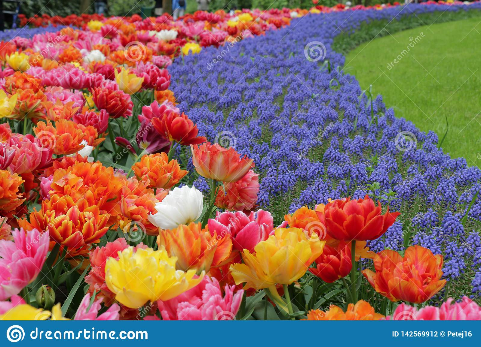 Mooie met gras bedekte gebogen tuin met vele gekleurde bloemen