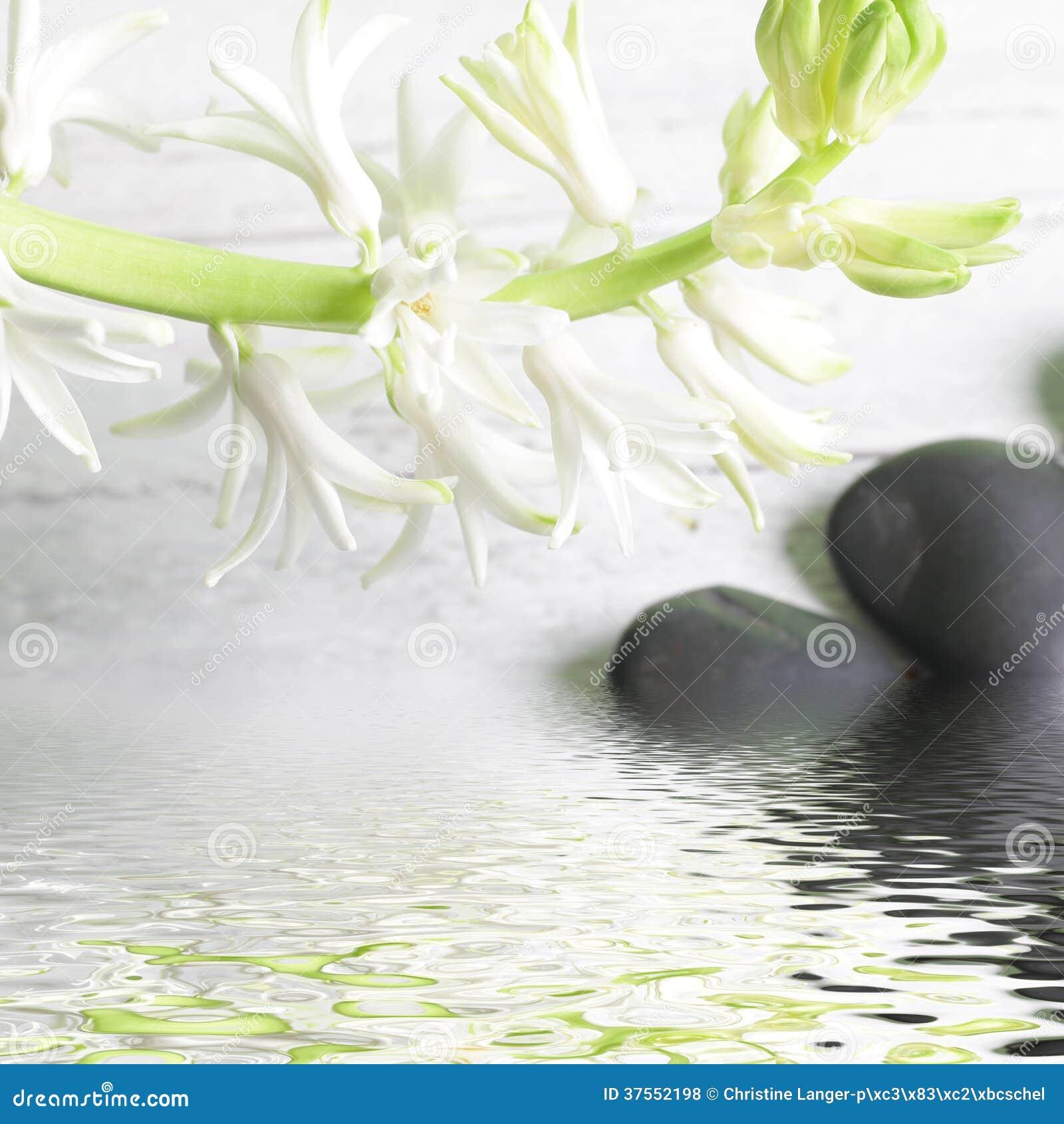 Mooie nevel van witte de lentebloemen over water
