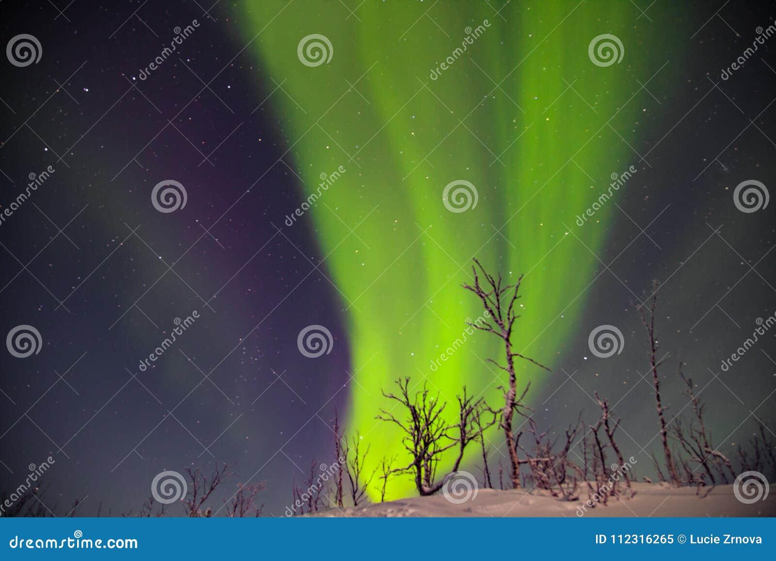 Mooie noordelijke lichten over lappland in finnland