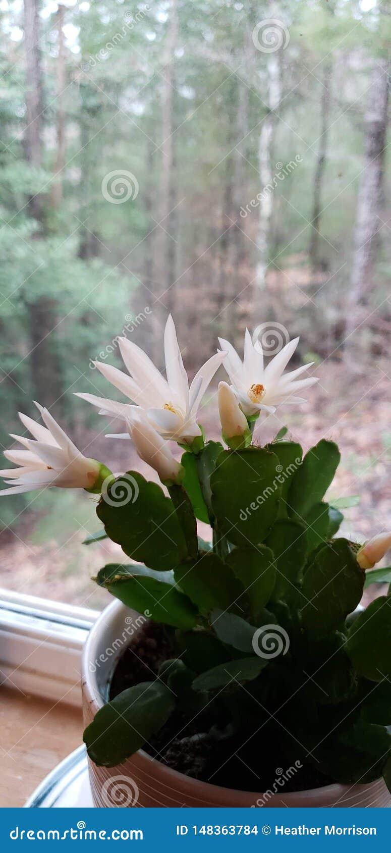 Mooie Pasen-Cactus