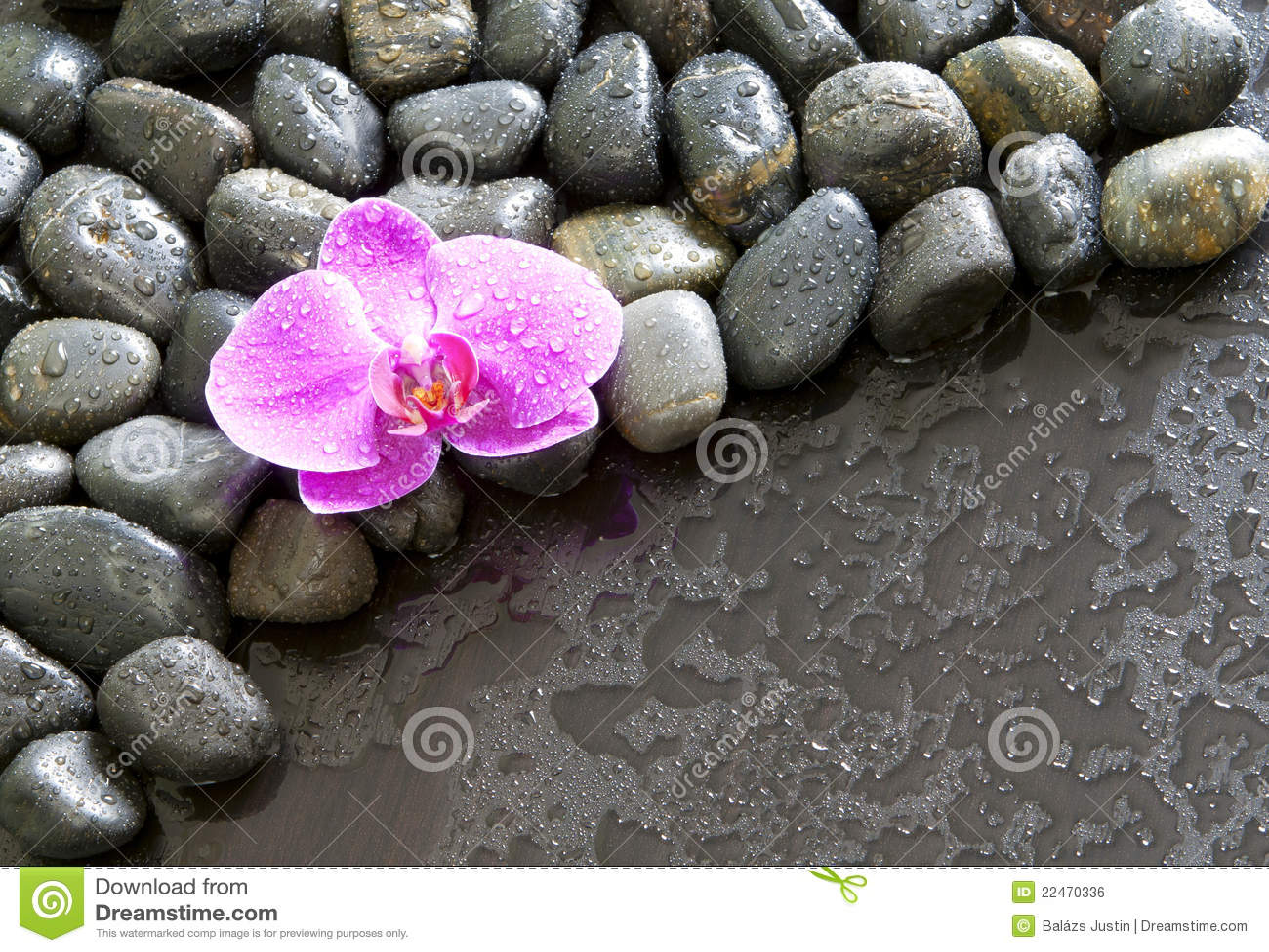 Mooie purpere orchidee, rotsen en waterdruppeltjes.