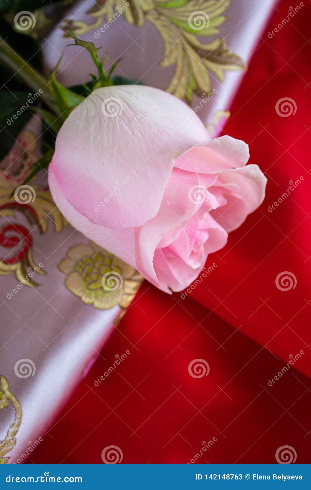 Mooie roze nam op roze en rode stoffenachtergrond toe