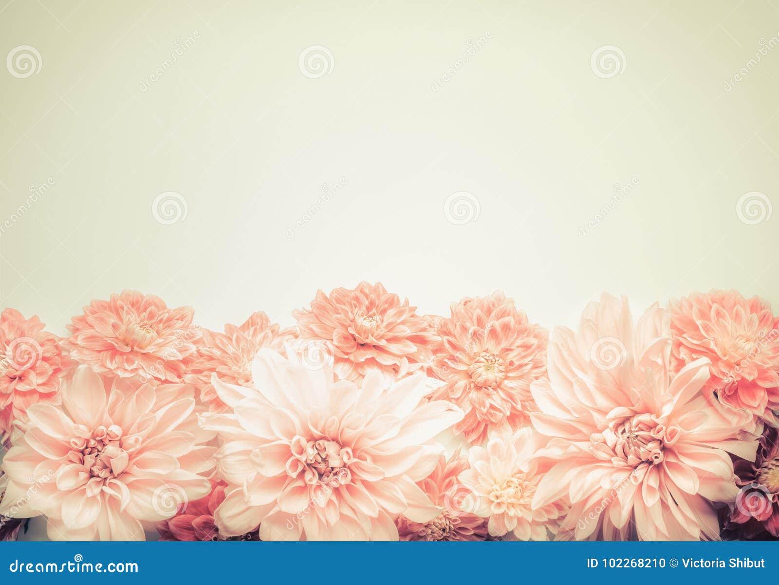 Mooie roze pastelkleurbloemen op beige achtergrond, bovenkant, grens Mooie groetkaart of uitnodiging voor huwelijk, Moedersdag