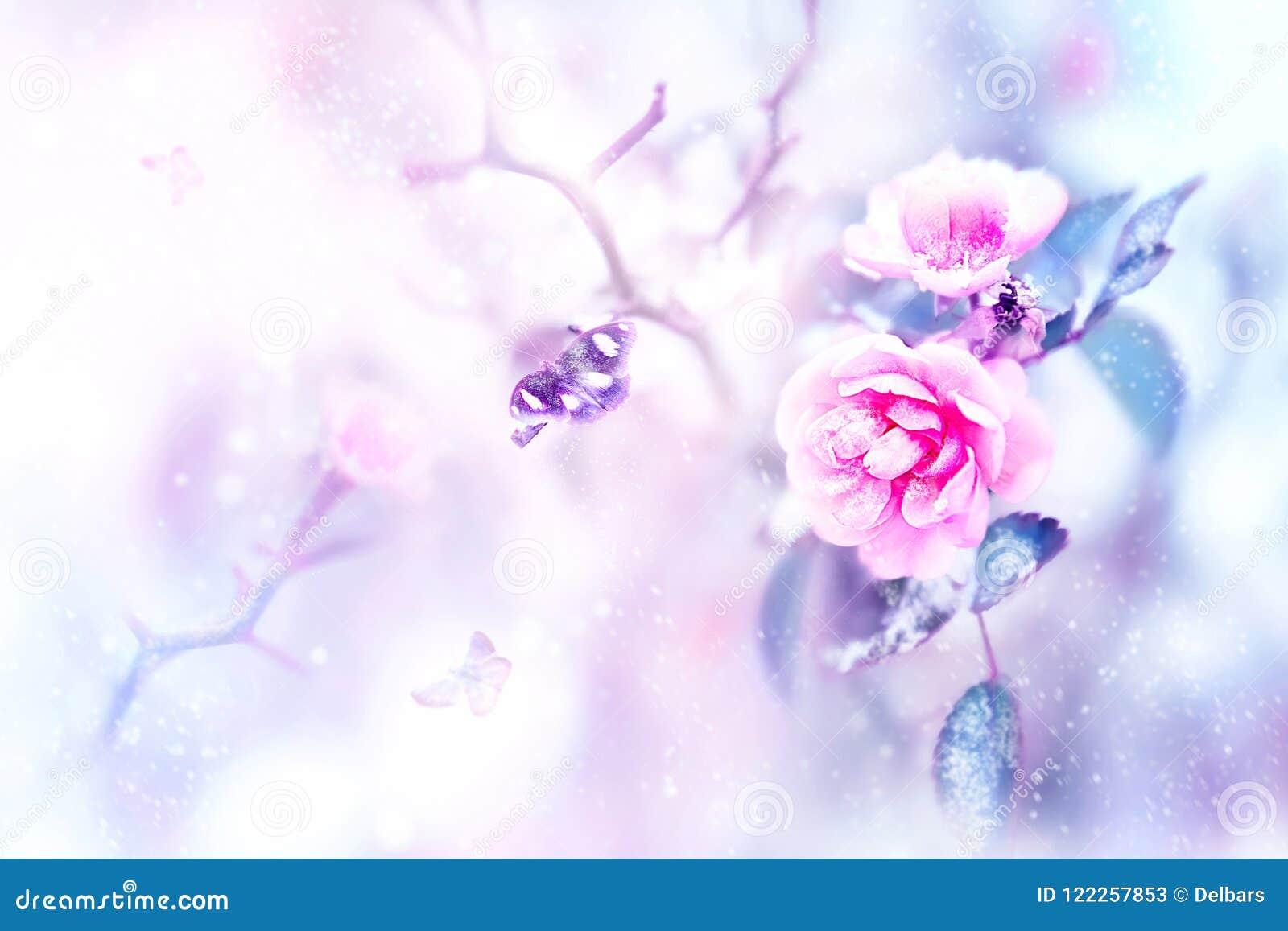 Mooie roze rozen en vlinders in de sneeuw en vorst op een blauwe en roze achtergrond snowing Artistiek de winter natuurlijk beeld