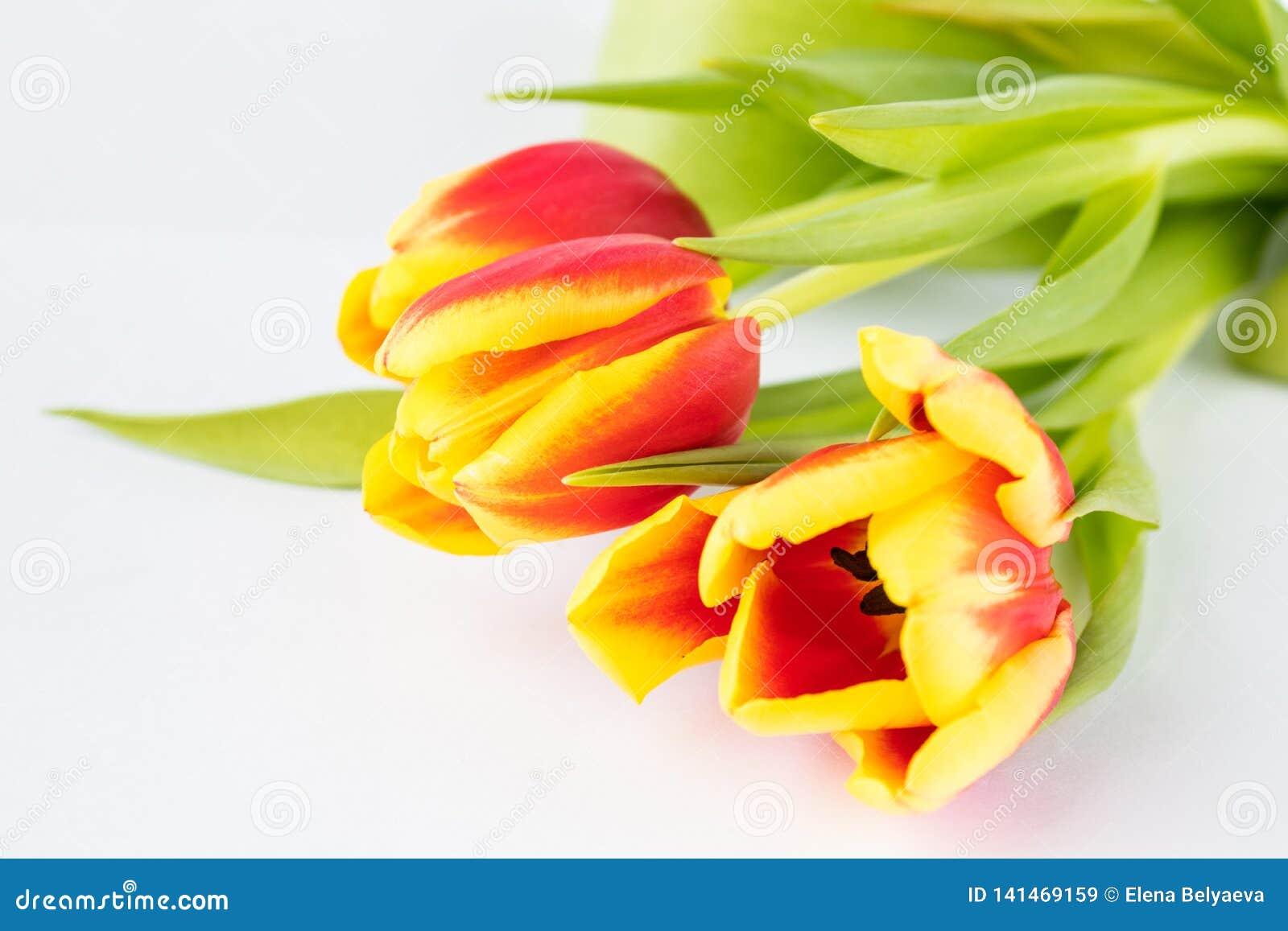Mooie samenstelling met de kleuren van de tulpen, op een witte achtergrond
