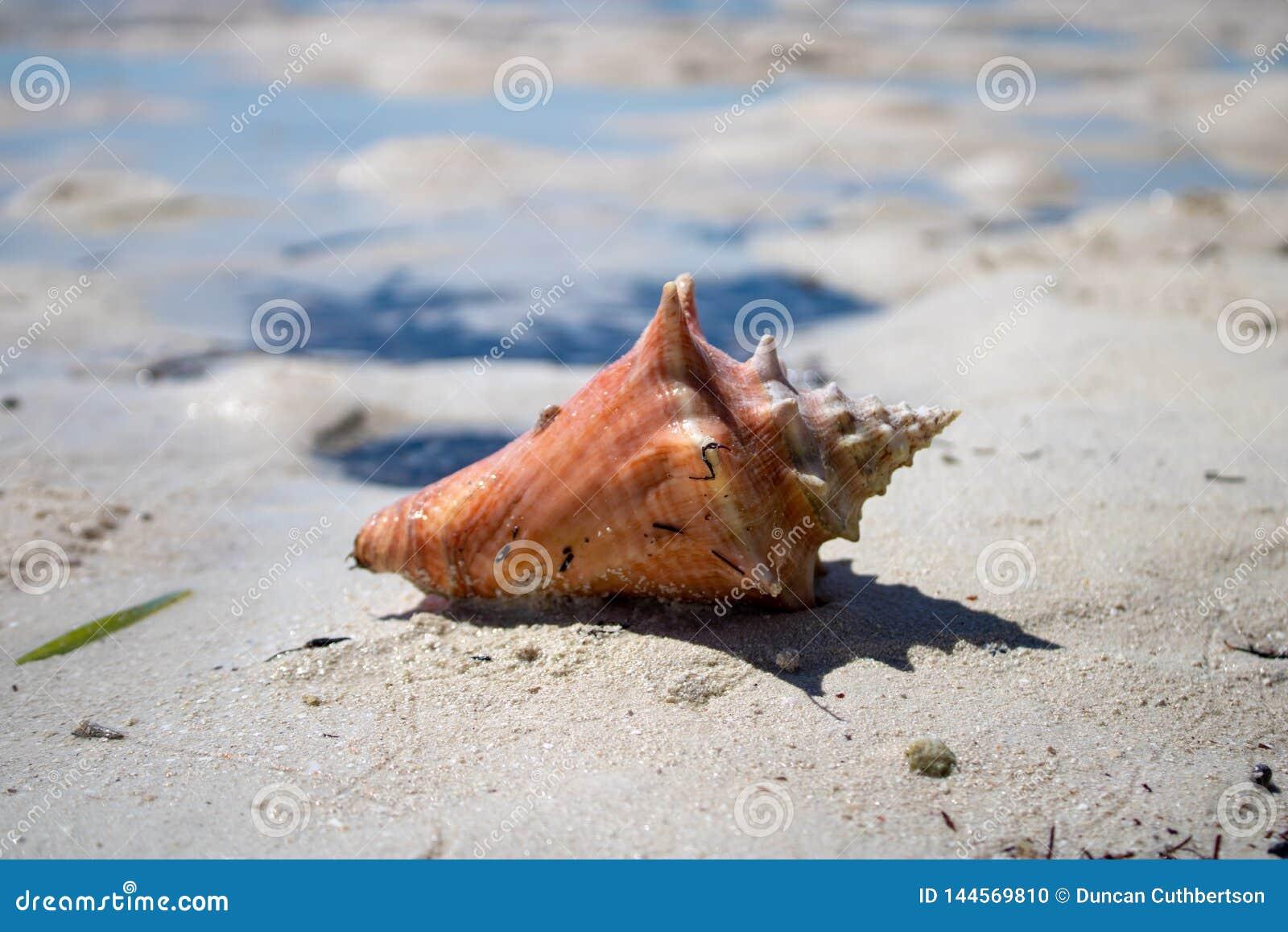 Mooie shell op een tropisch zandig strand