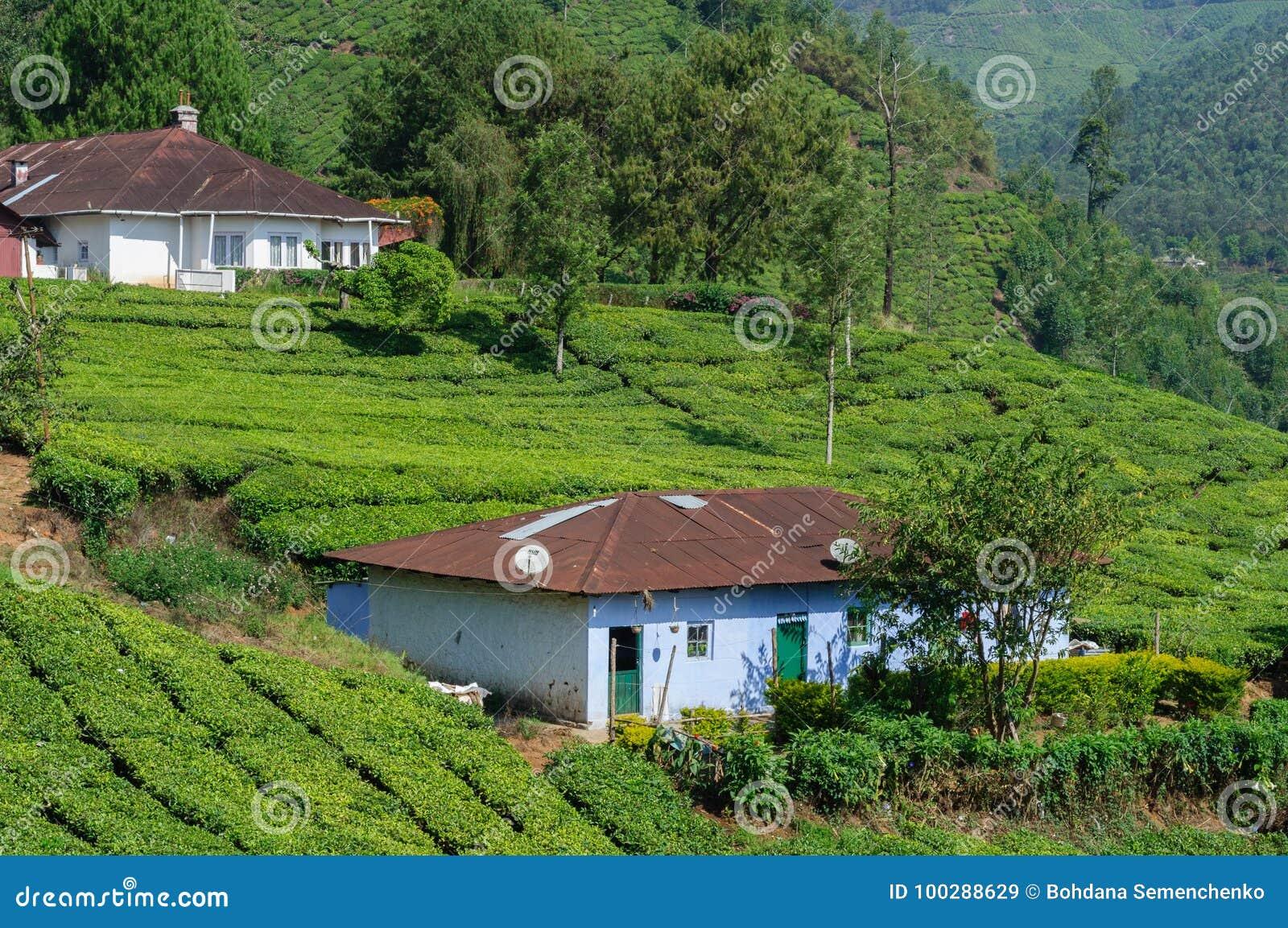 Mooie toneelmening van huis op theegebied in berg dichtbij Munnar, Kerala, India