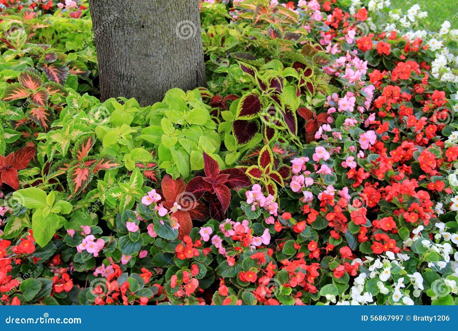 Mooie tuin van bloemen en installaties rond bomen in for Arboles de flores para jardin