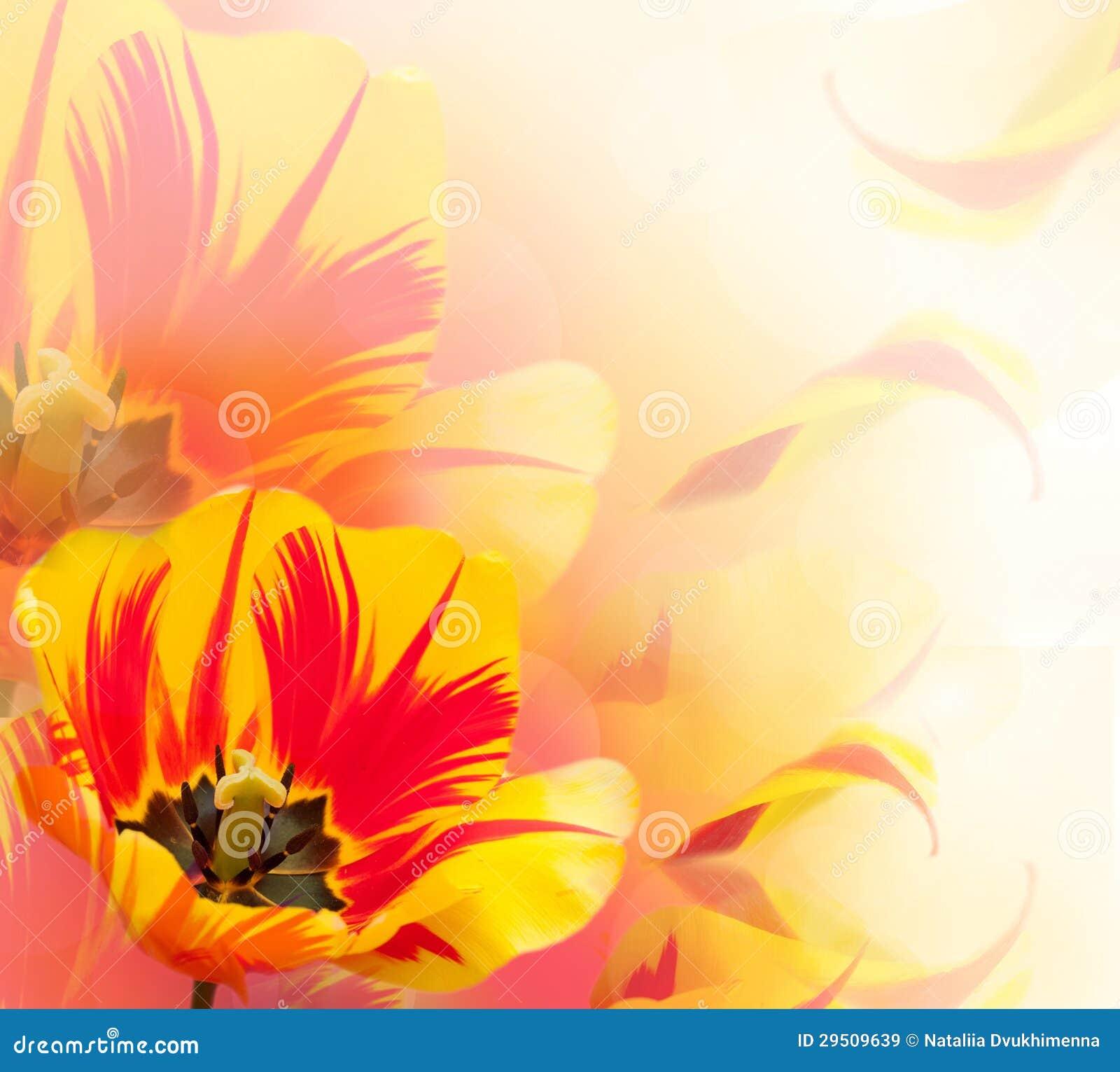 Mooie tulpenachtergrond
