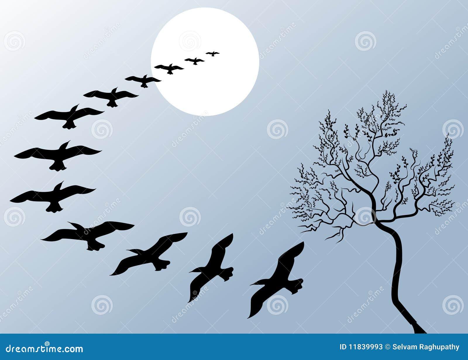 Mooie vliegende vogels