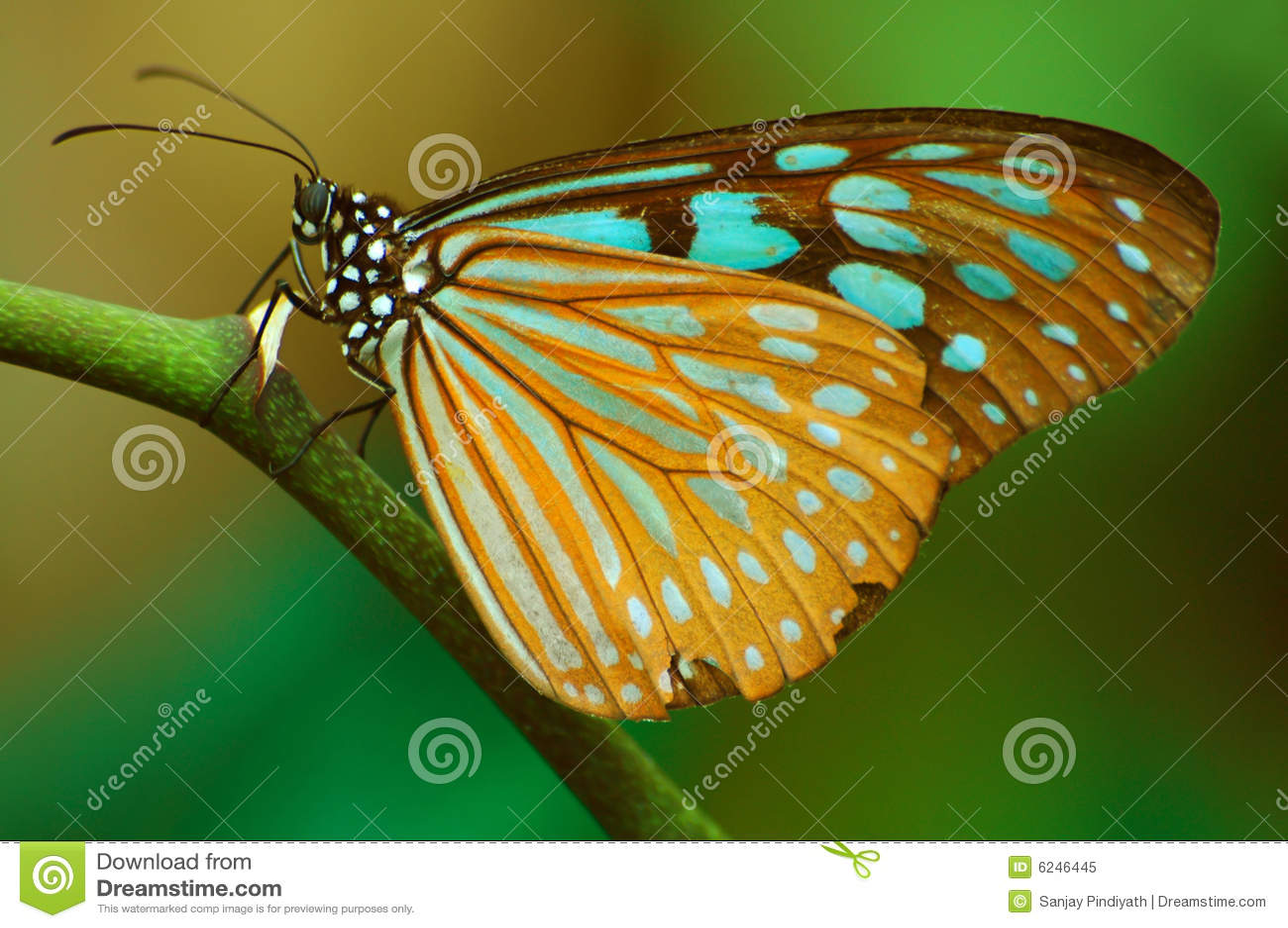 21 mooie kleurrijke vlinder - photo #17