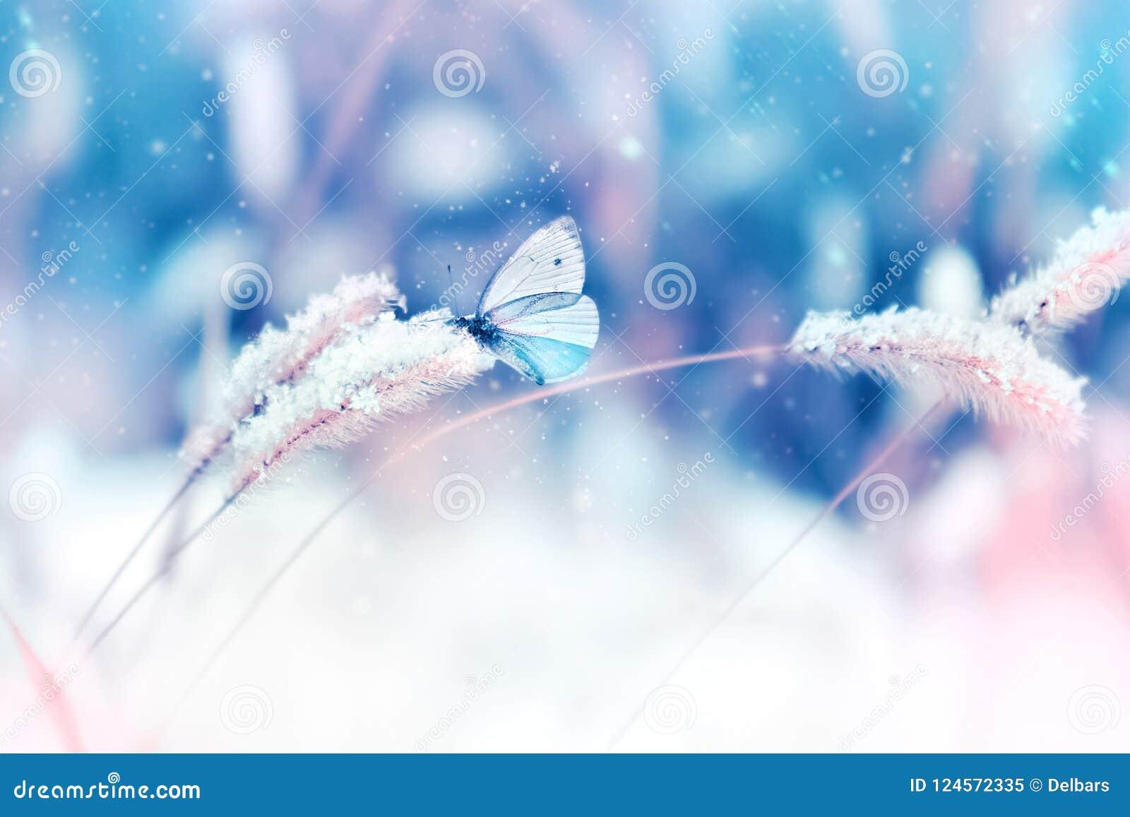 Mooie vlinder in de sneeuw op het wilde gras op een blauwe en roze achtergrond snowing Het artistieke natuurlijke beeld van de wi