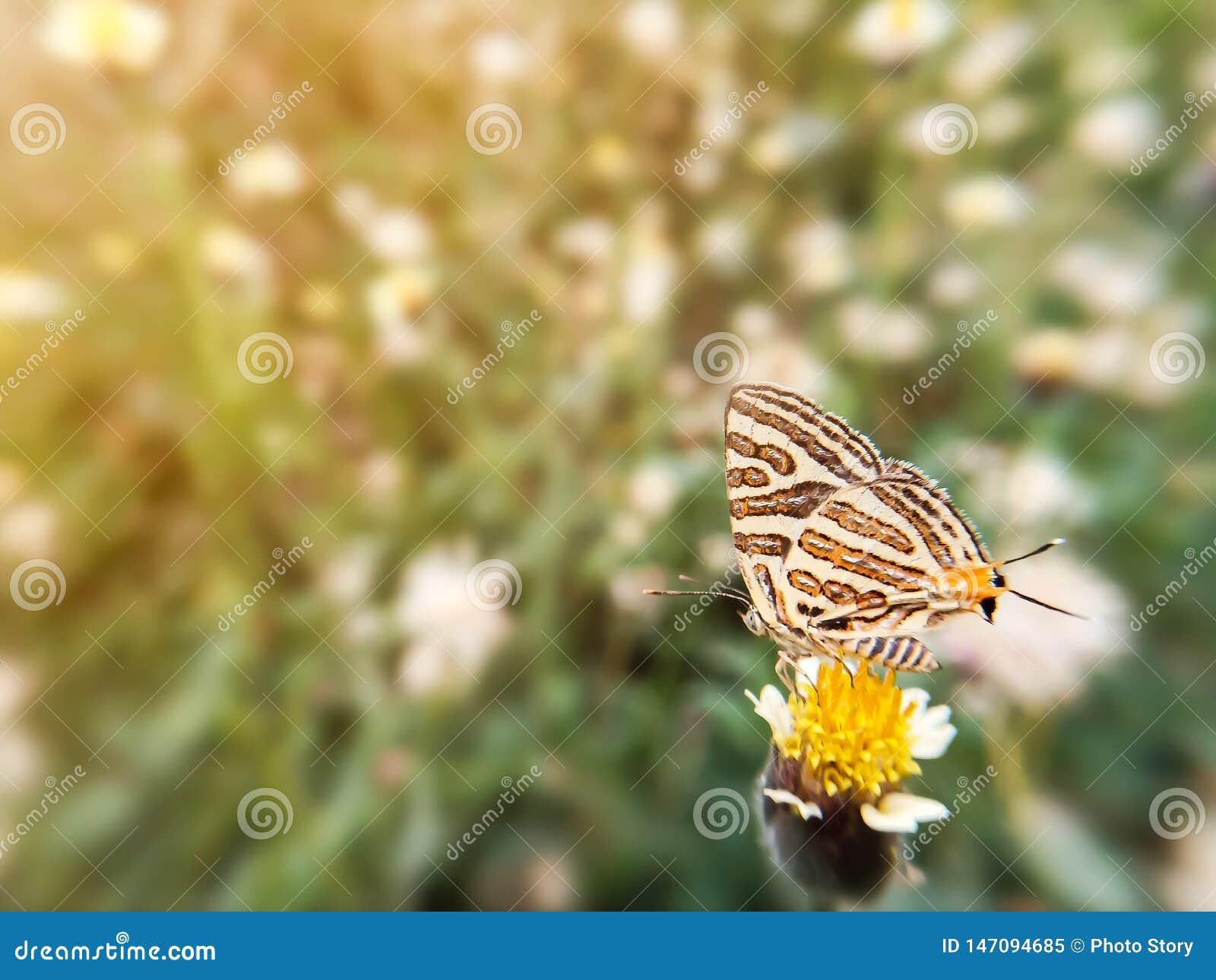 Mooie vlinder op bloemgras en zonlicht tijdens de dag Vage beeld natuurlijke achtergrond