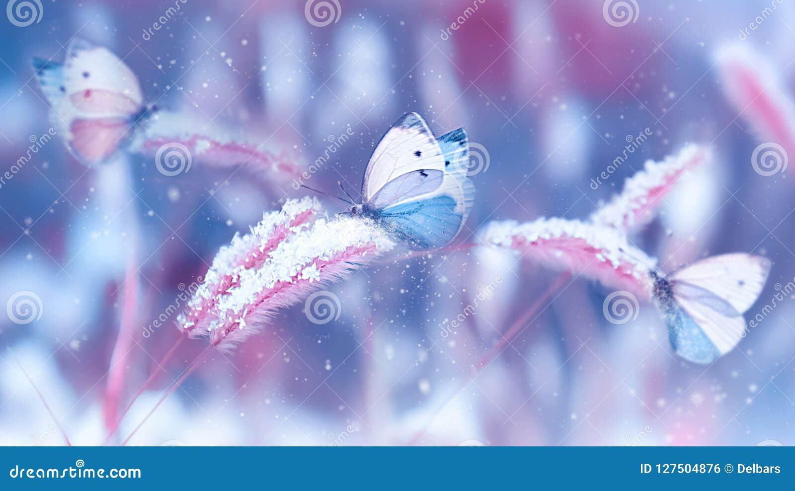 Mooie vlinders in de sneeuw op het wilde gras op een blauwe en roze achtergrond Kerstmis natuurlijke imag van de sneeuwval Artist