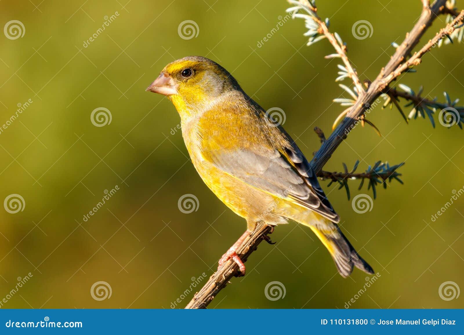 Mooie vogel in de aard