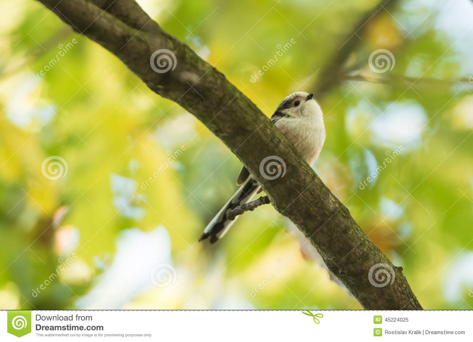 Mooie vogel op de tak