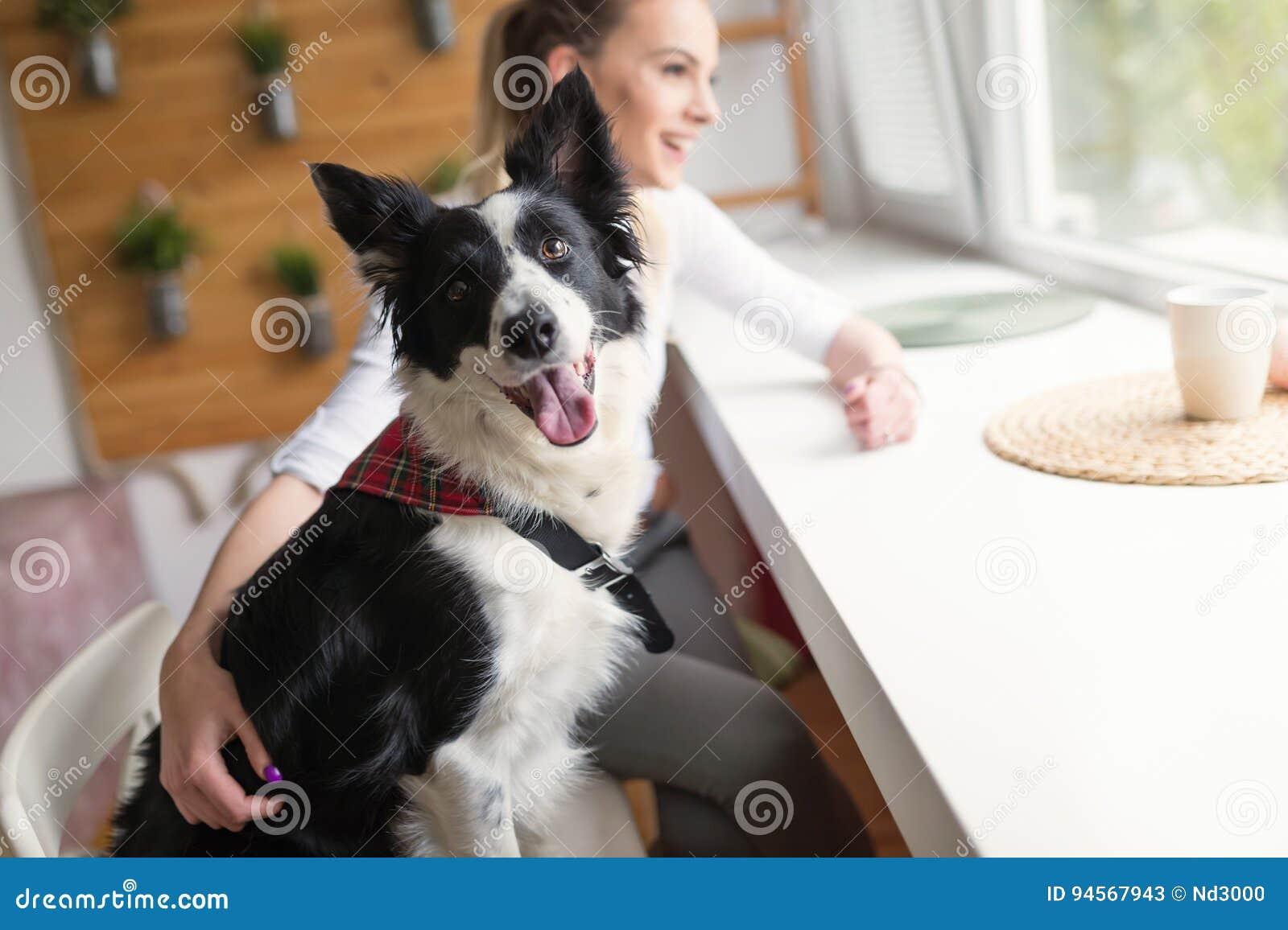Mooie vrouw en haar beste vriend een gelukkige hond