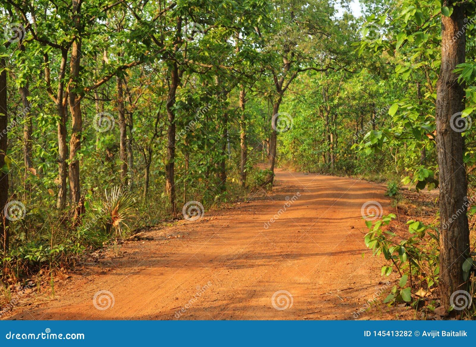 Mooie weg in bos in birbhum