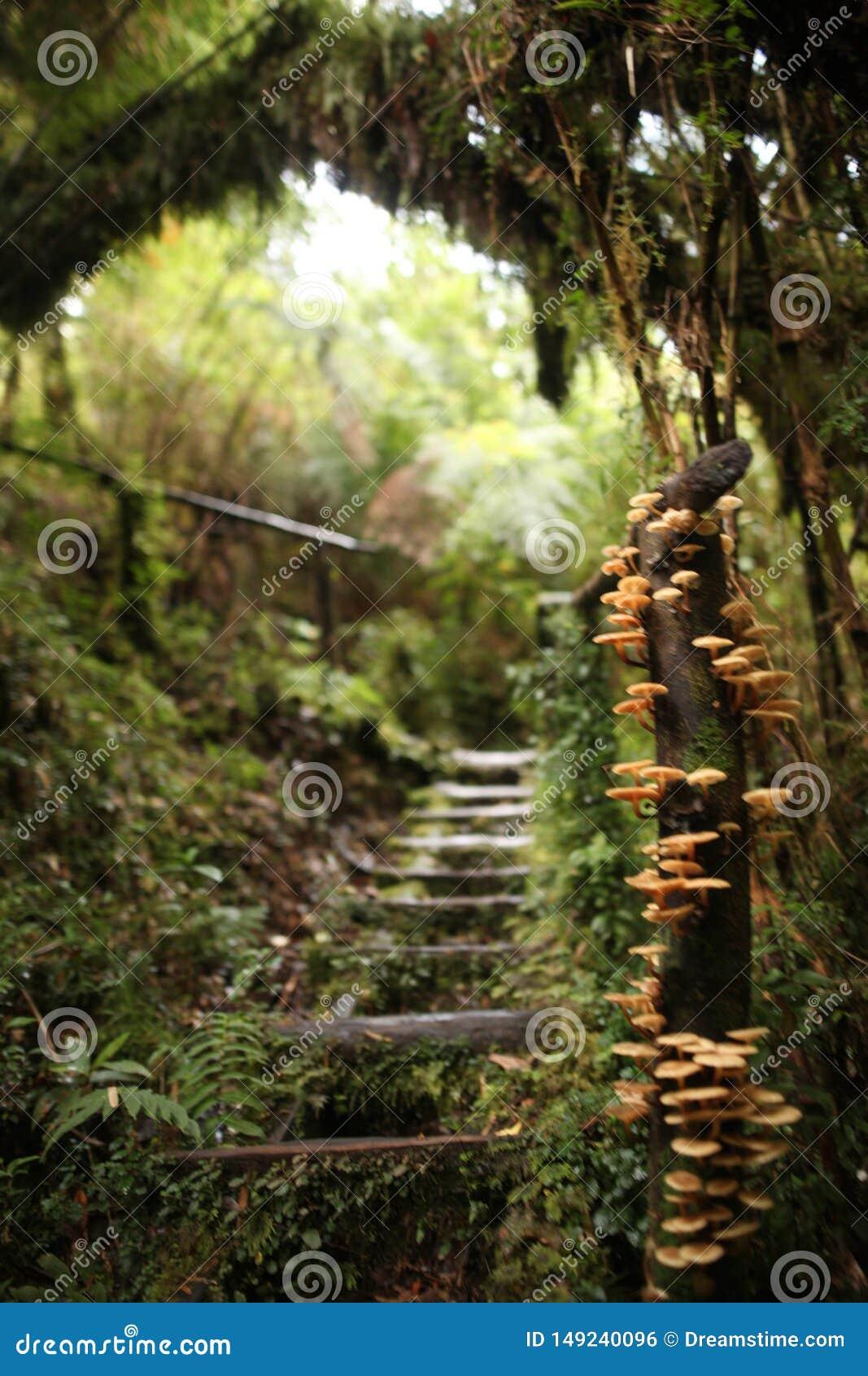 Mooie weg met paddestoelen in het Nationale Park van Pumalin, Zuidelijke Carretera, Chili, Patagoni?