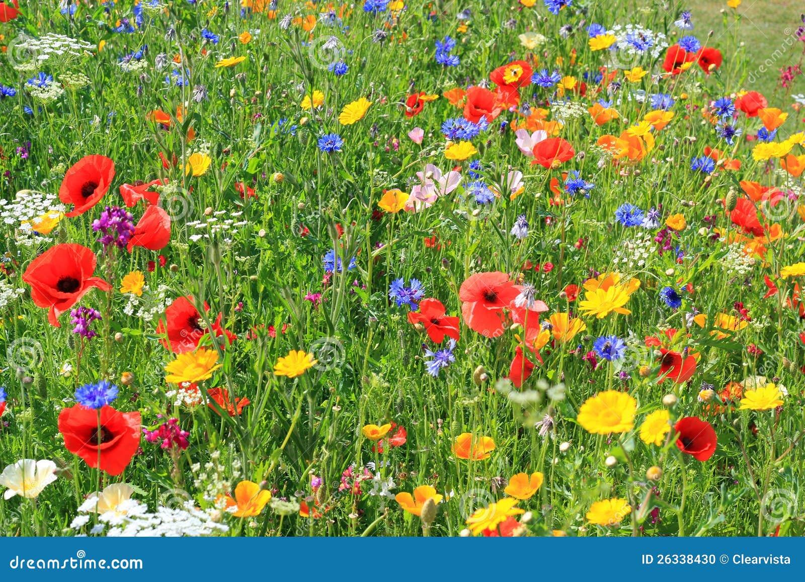 Mooie wilde bloemen.