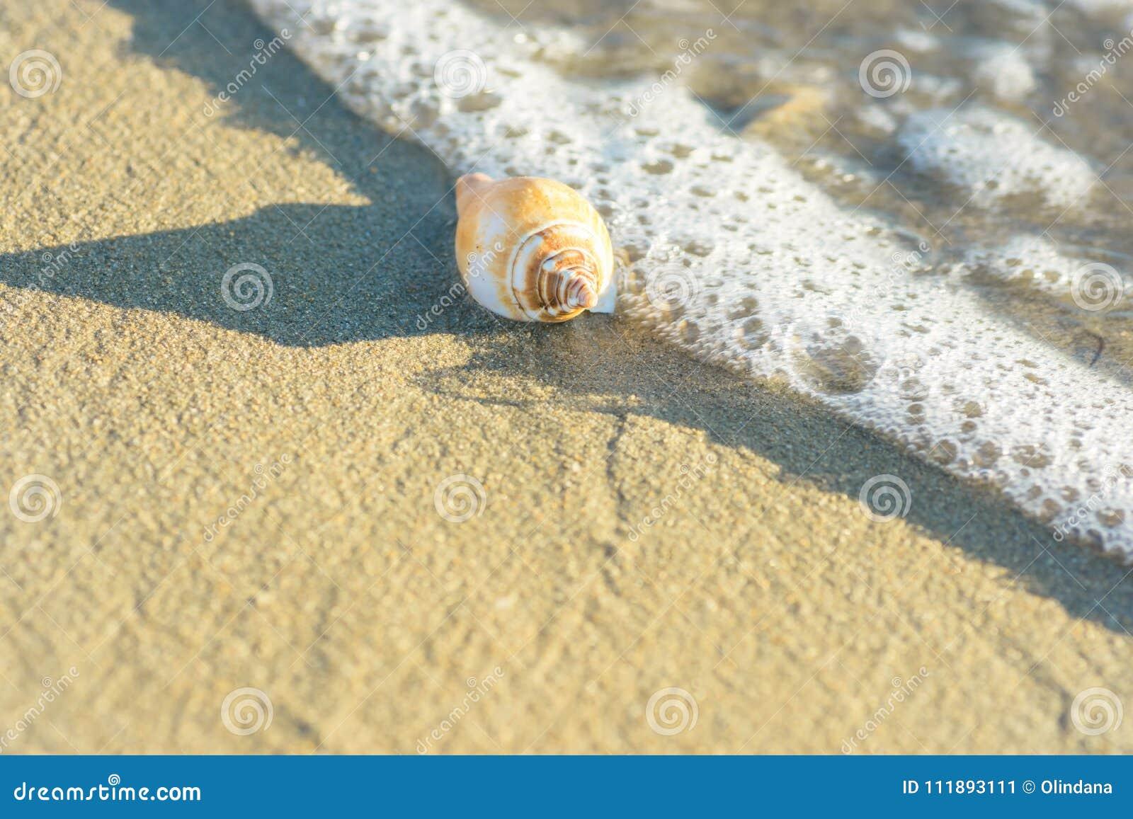 Mooie Witte Beige Spiraalvormige die Overzees Shell op Strandzand door Schuimende Golf wordt gewassen Transparant water Gouden Zo
