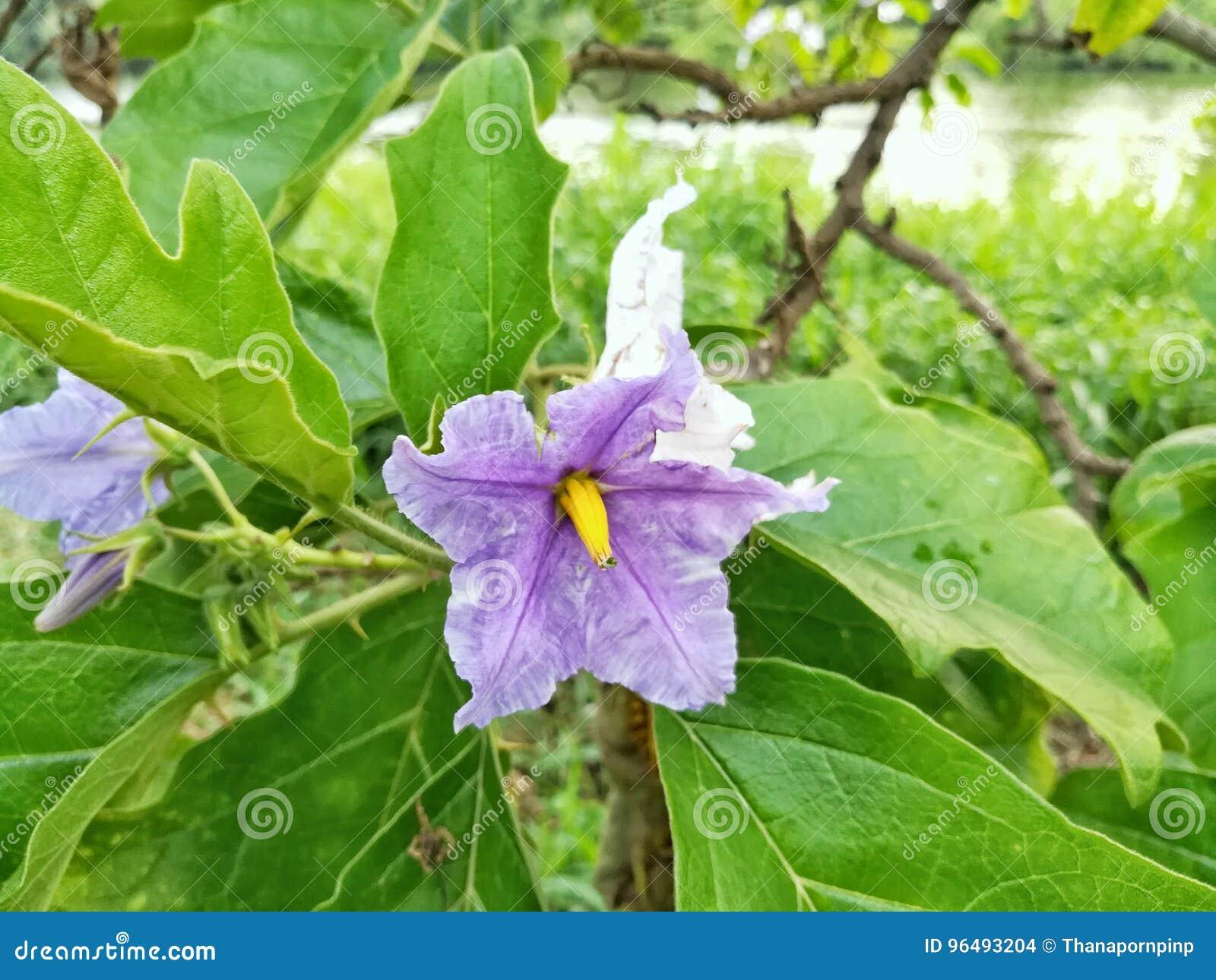 Mooie witte en violette kleurenbloemen